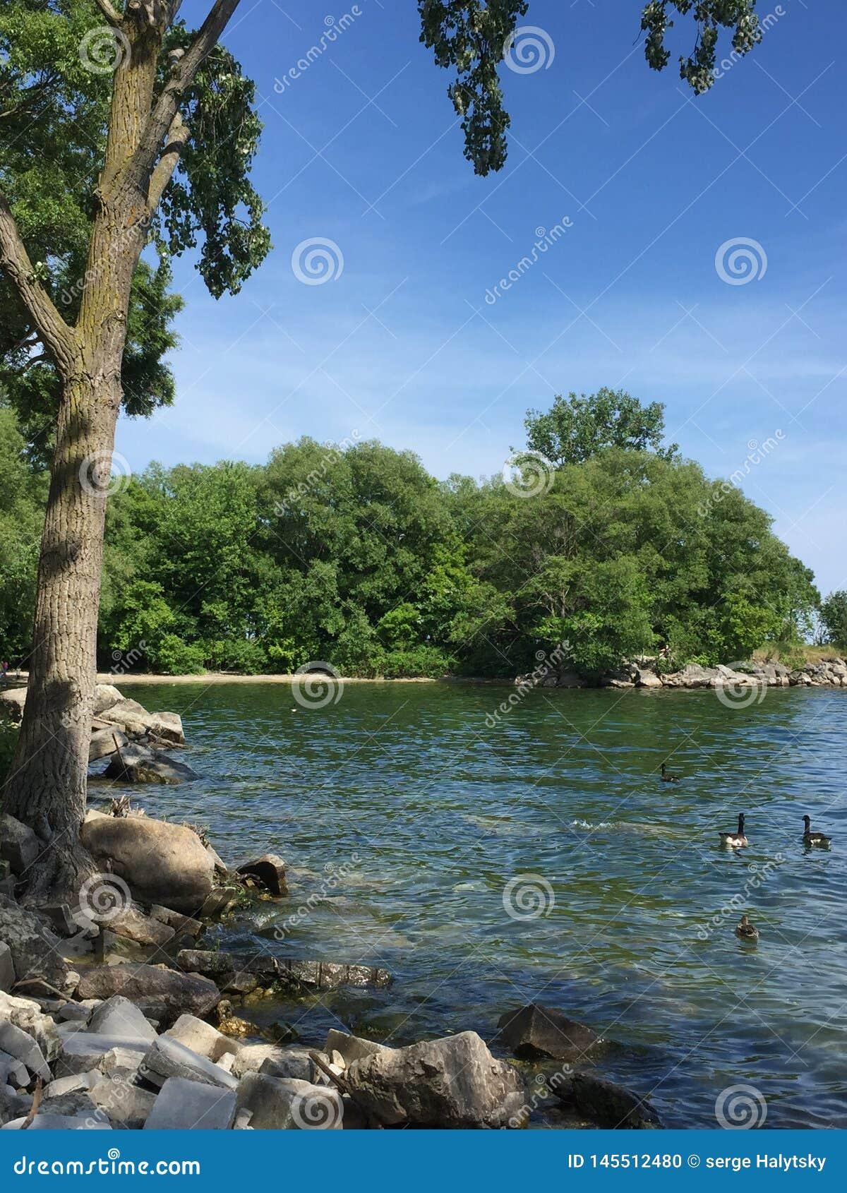 Парк Len Форда и Lake Ontario в красивом летнем дне в Торонто, Онтарио, Канаде S