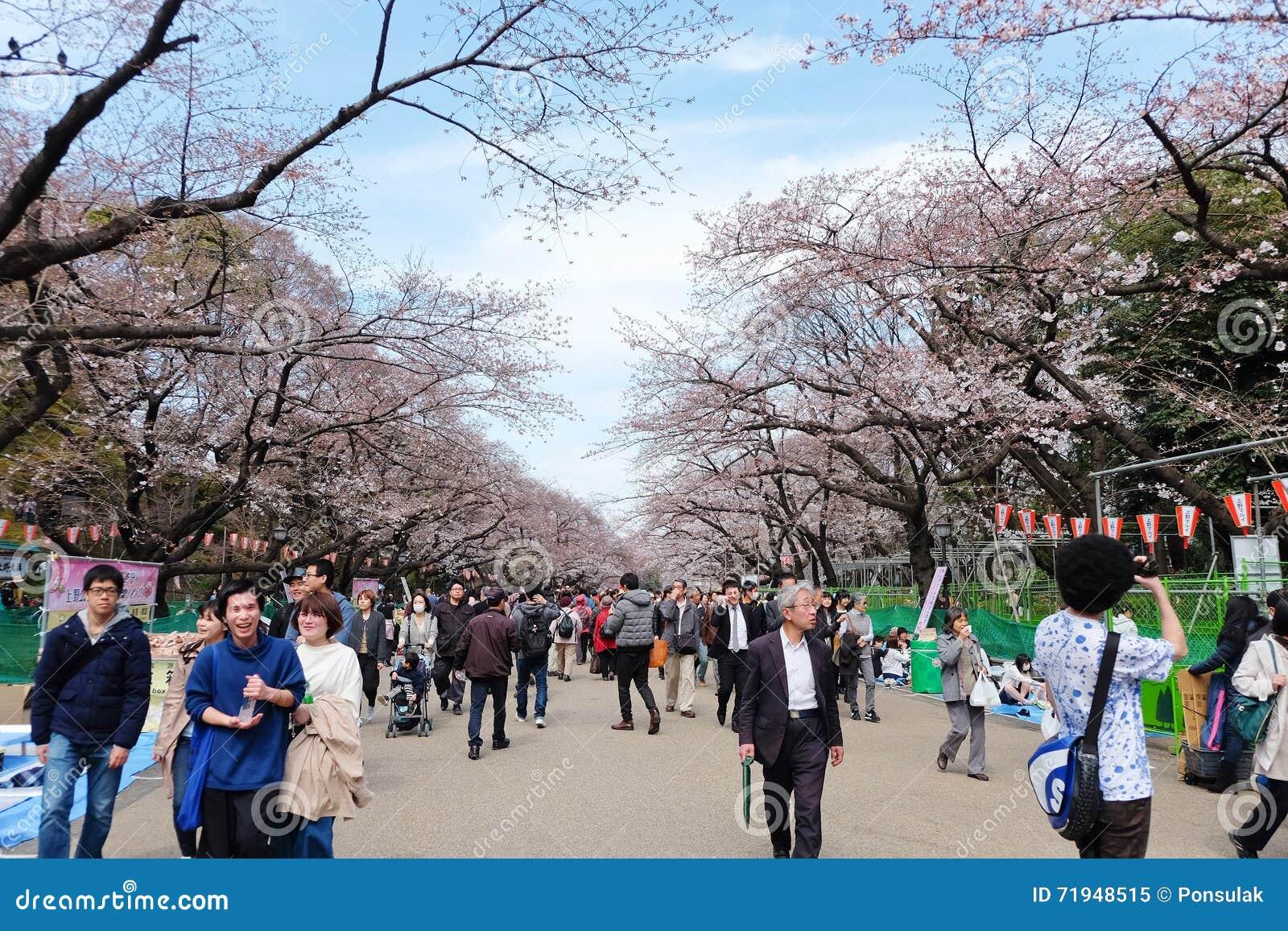 Парк Ueno во время сезона вишневого цвета