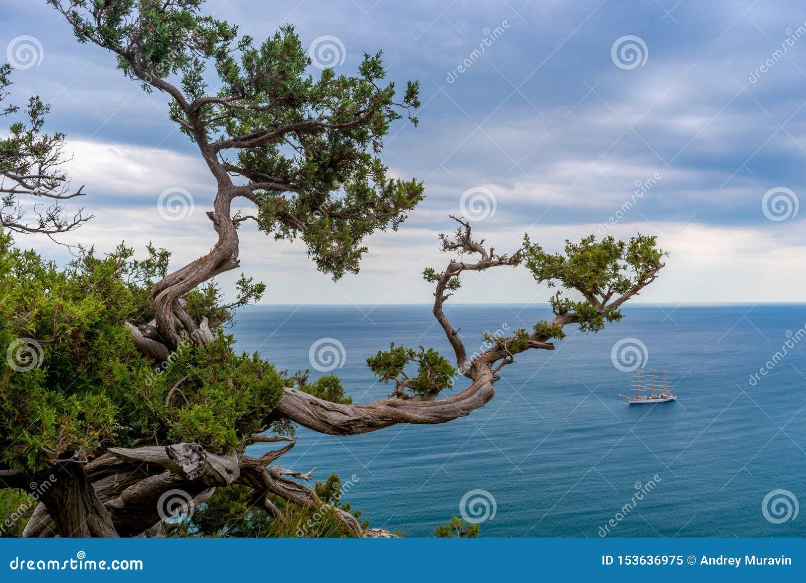 Парусник в заливе моря