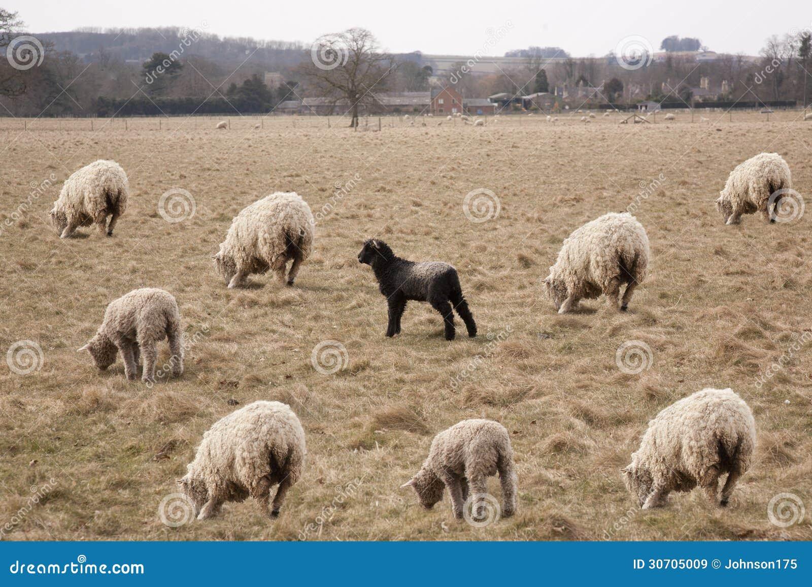 Паршивые овцы семьи