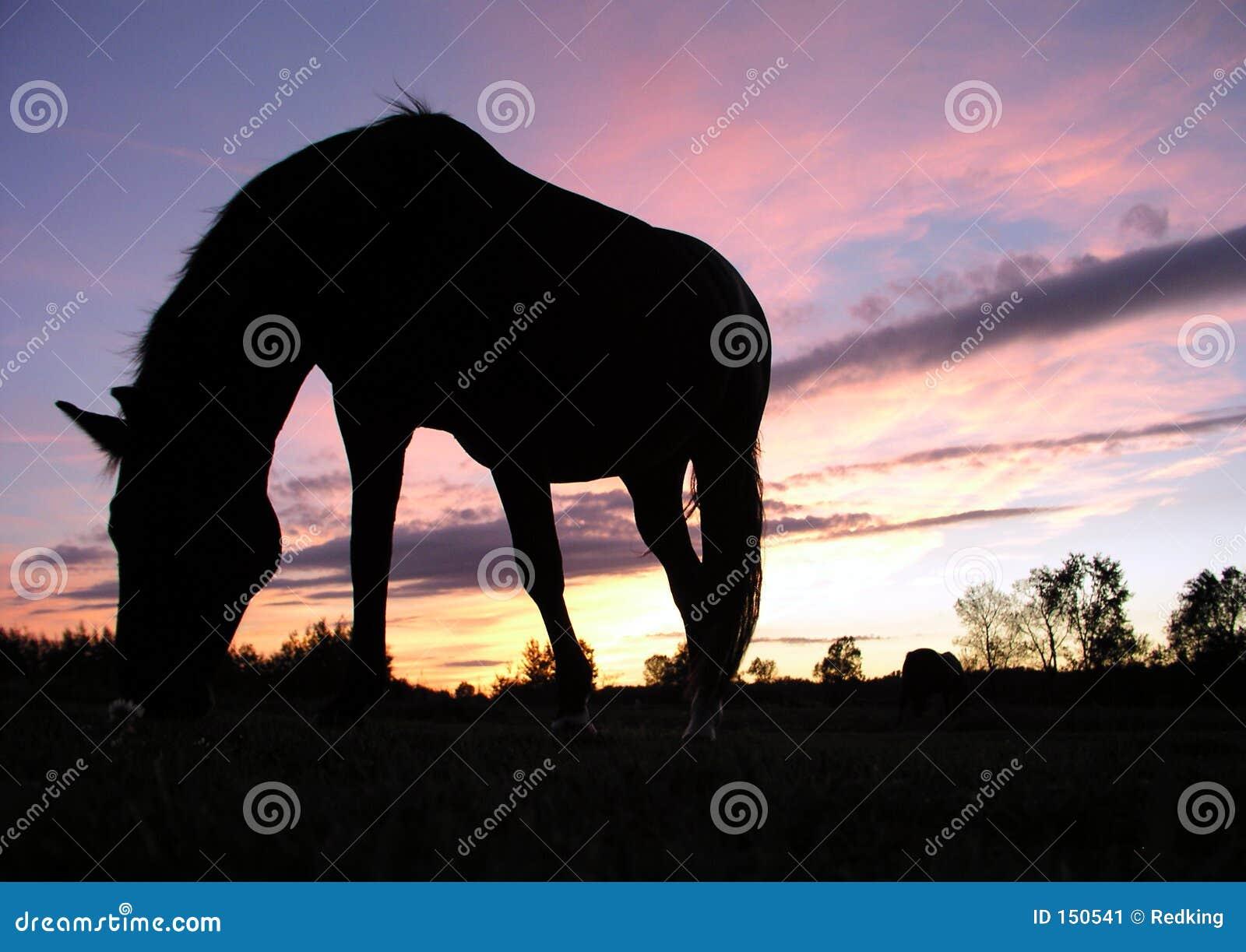 пасти заход солнца силуэта лошади