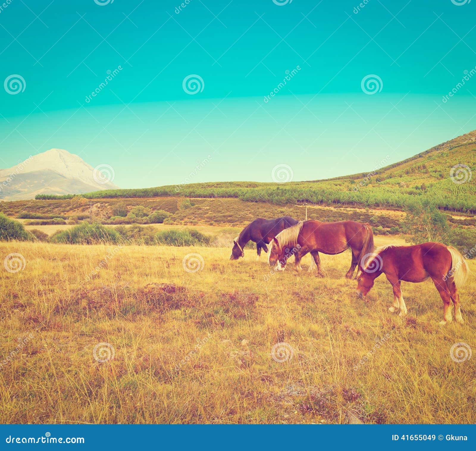 пасти лошадей
