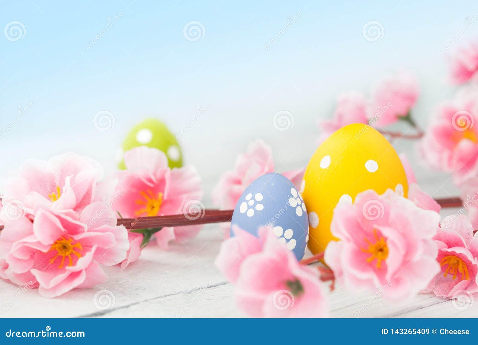 Пасхальные яйца и розовое украшение цветков на голубой предпосылке