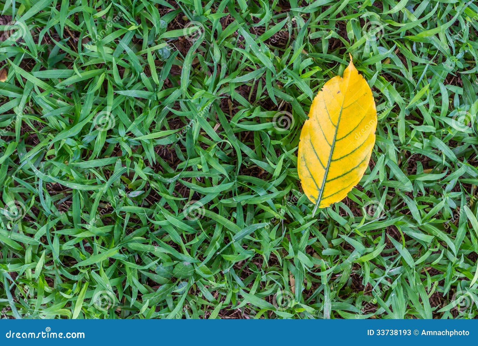 Падать листьев желтый на траву