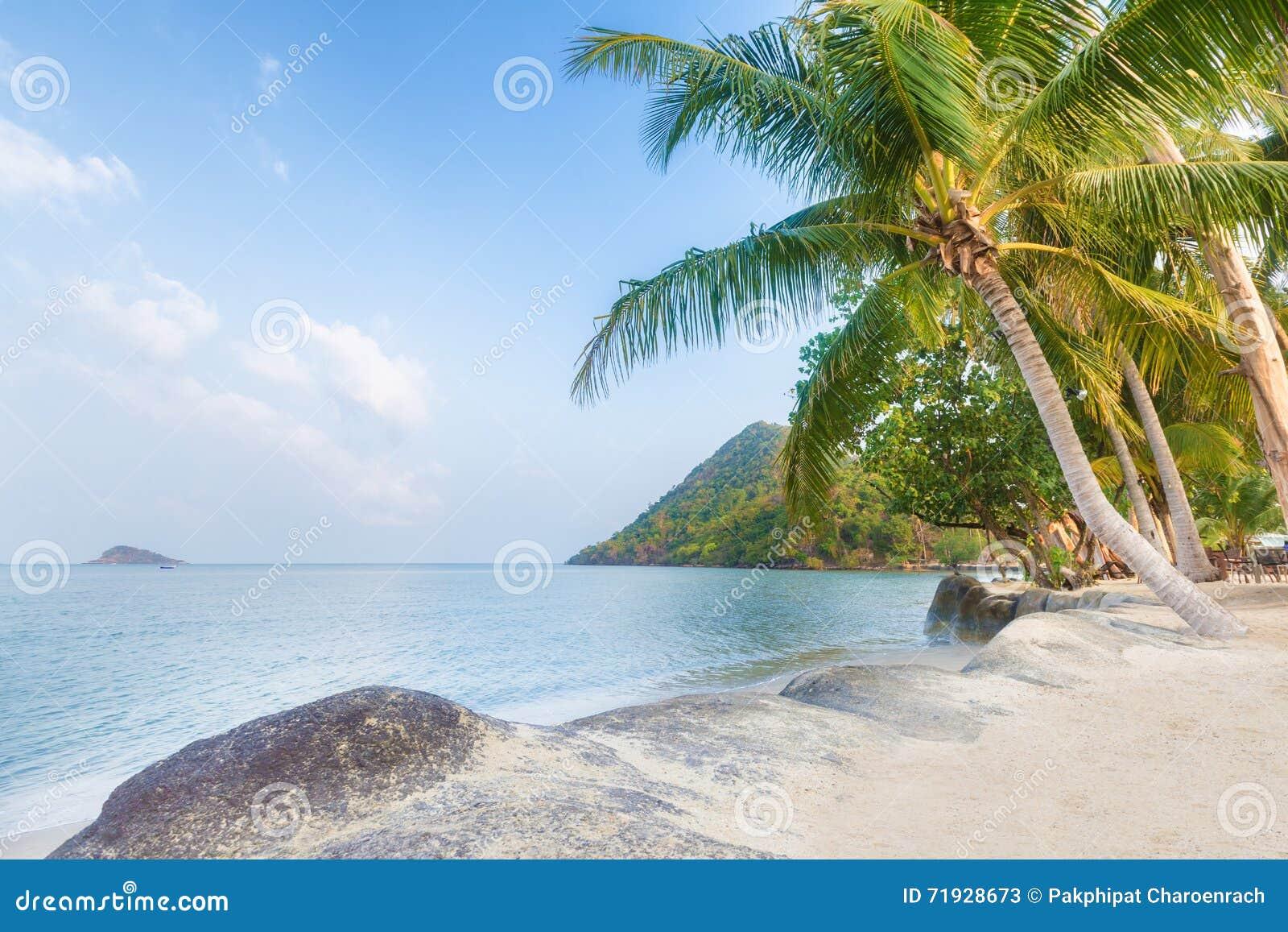 Пальма и пляж на красивом тропическом острове