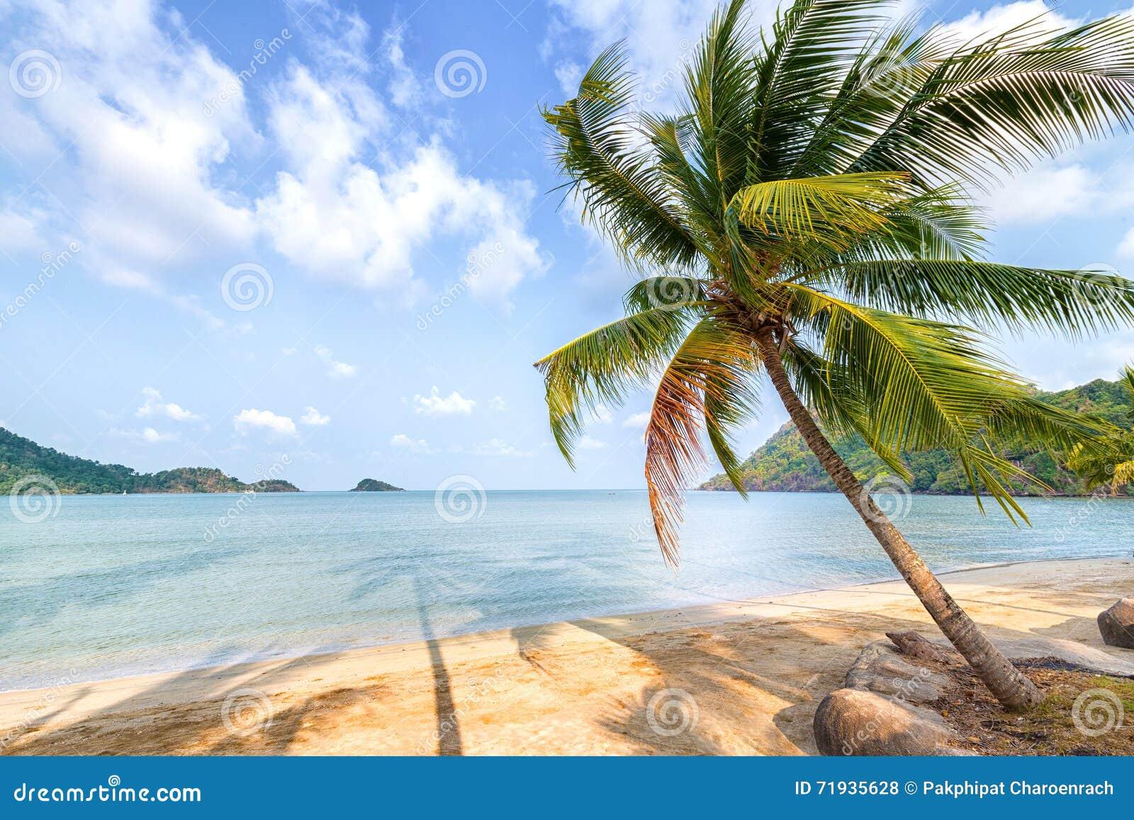 Пальма и пляж на тропическом острове