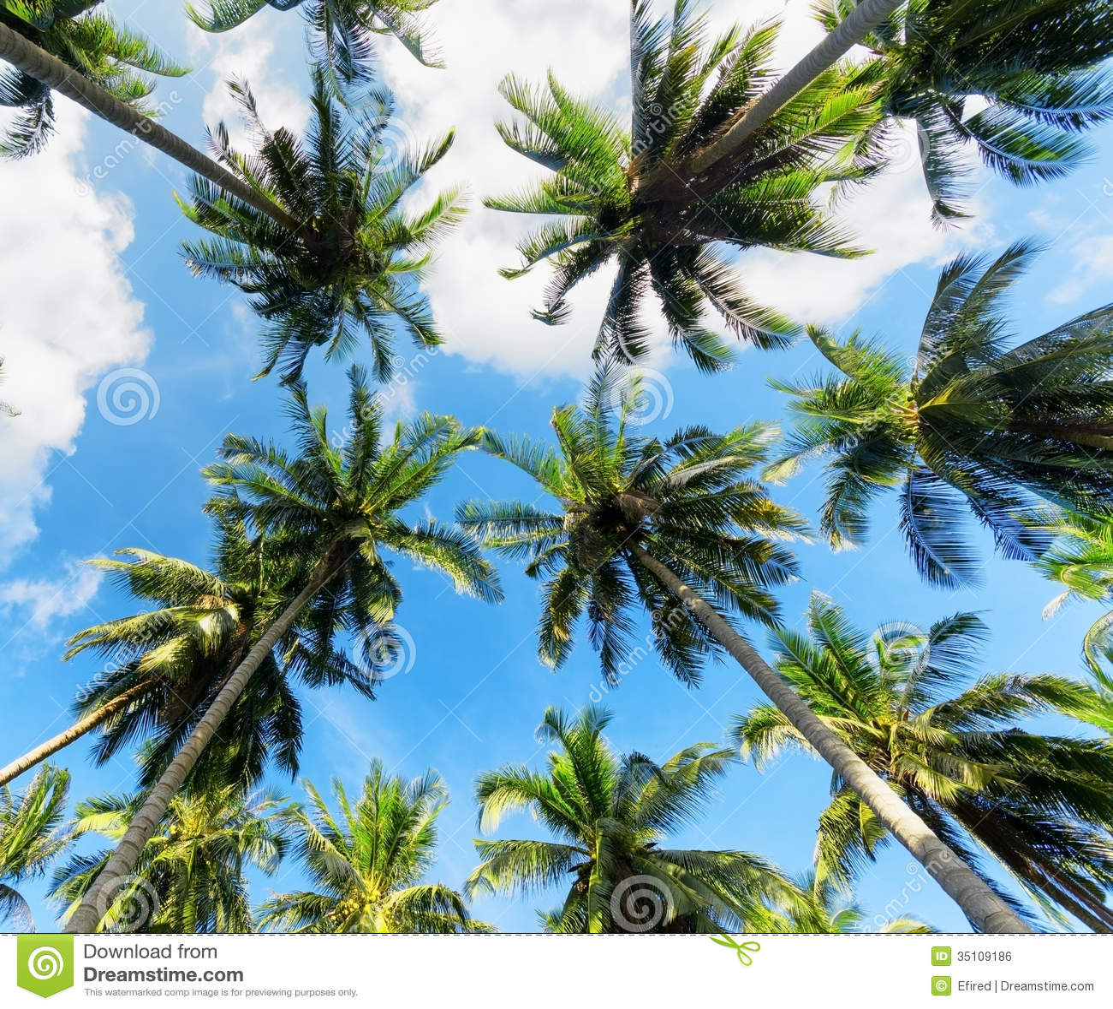 Пальмы против голубого неба