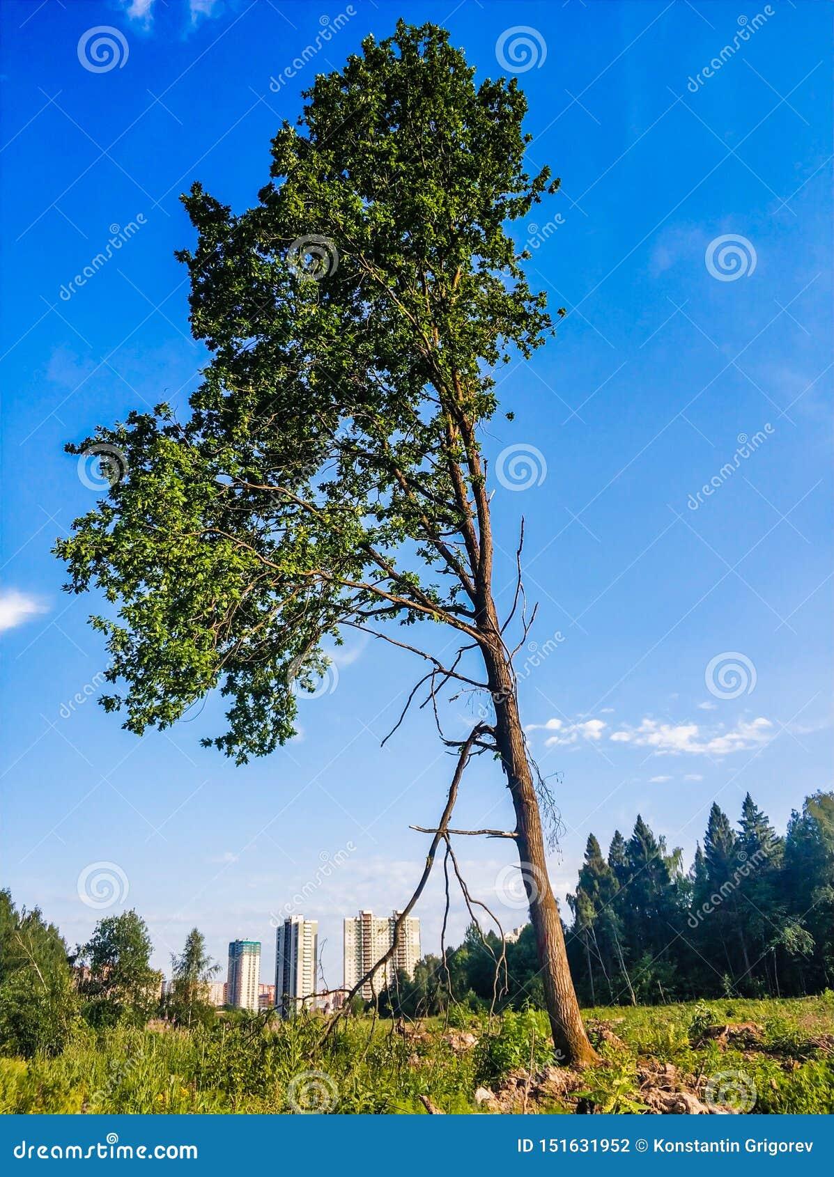 пейзаж ландшафта дерева стойки одного на поле травы