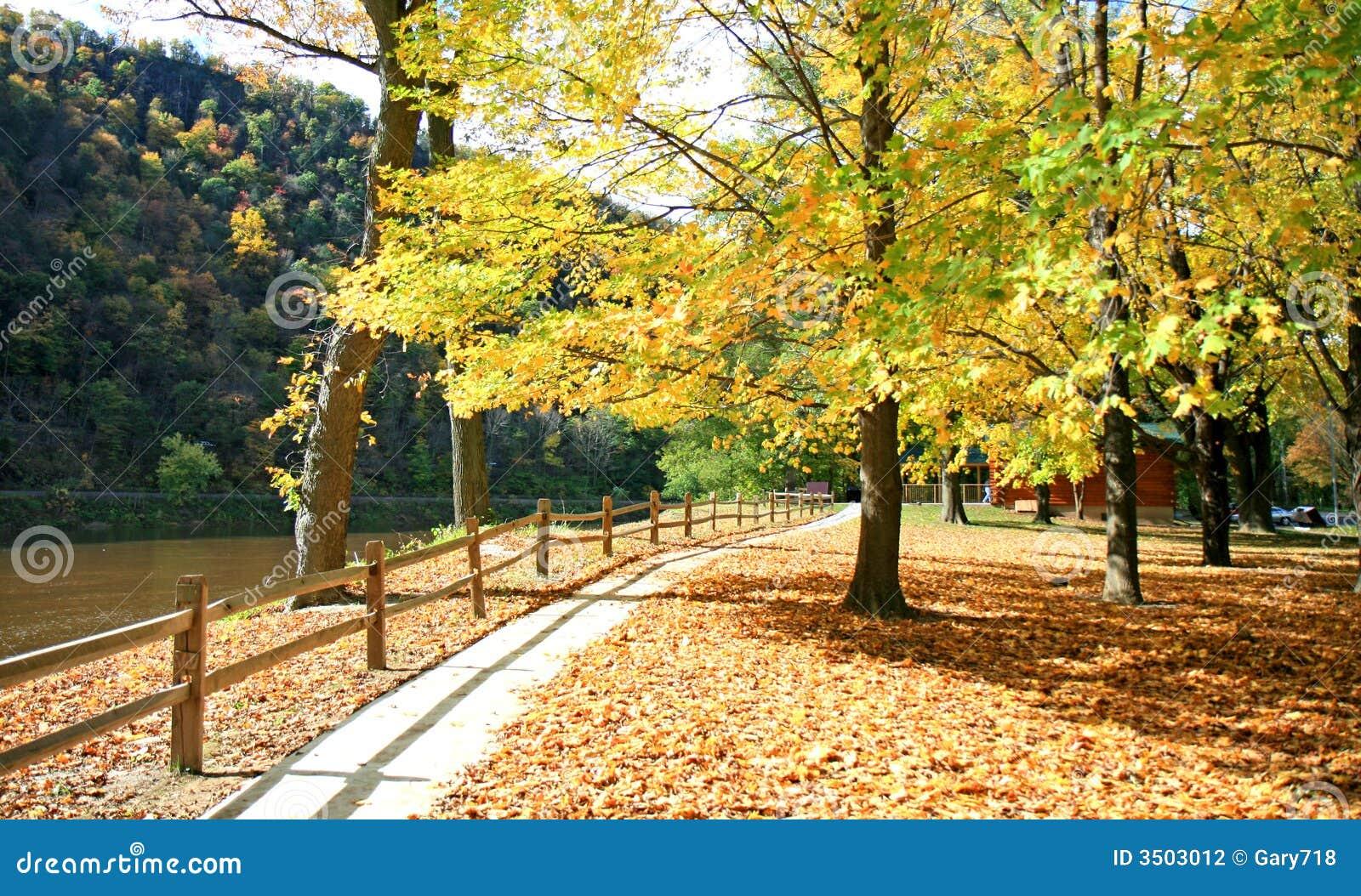 пейзаж листва