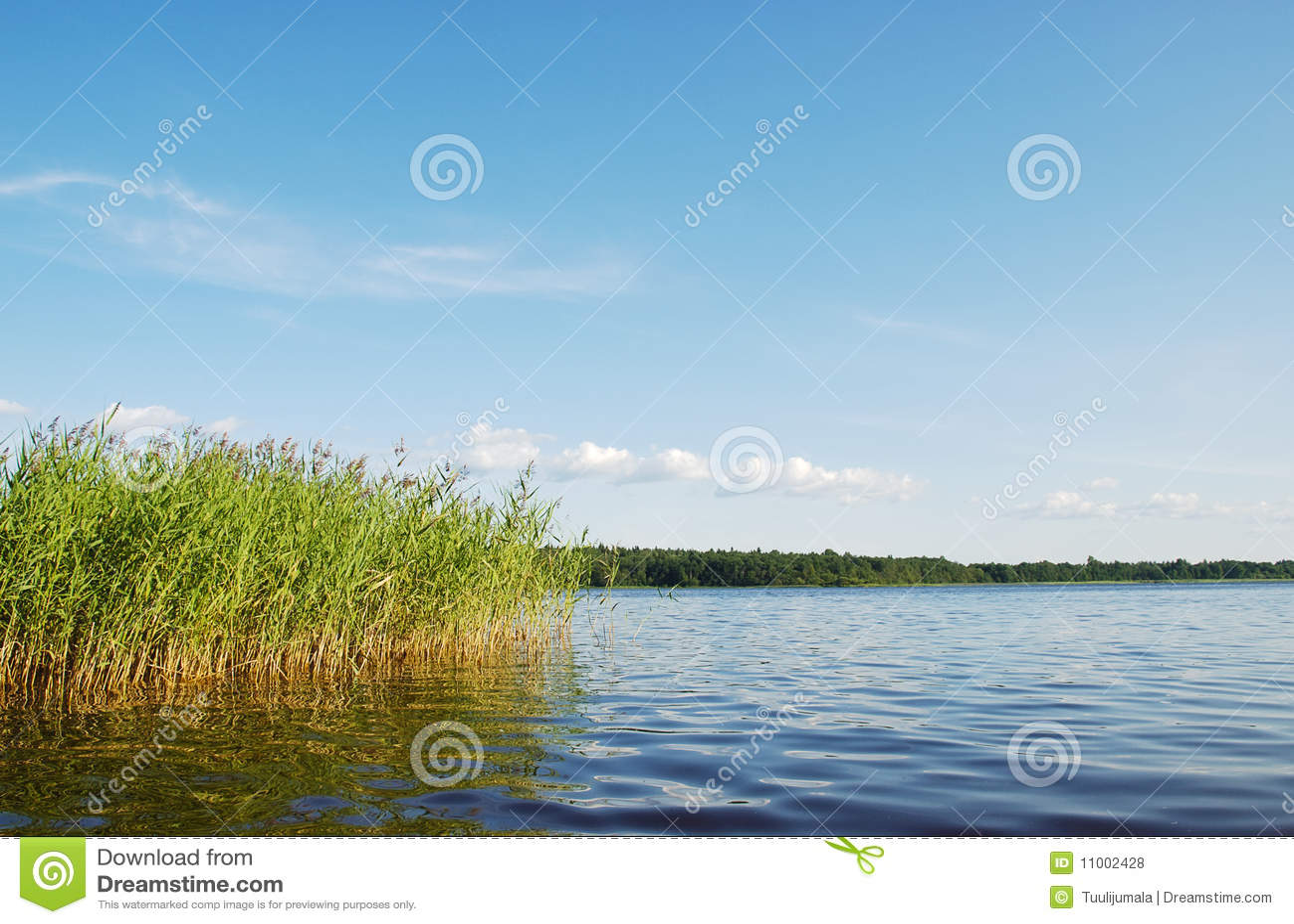 пейзаж озера пущи