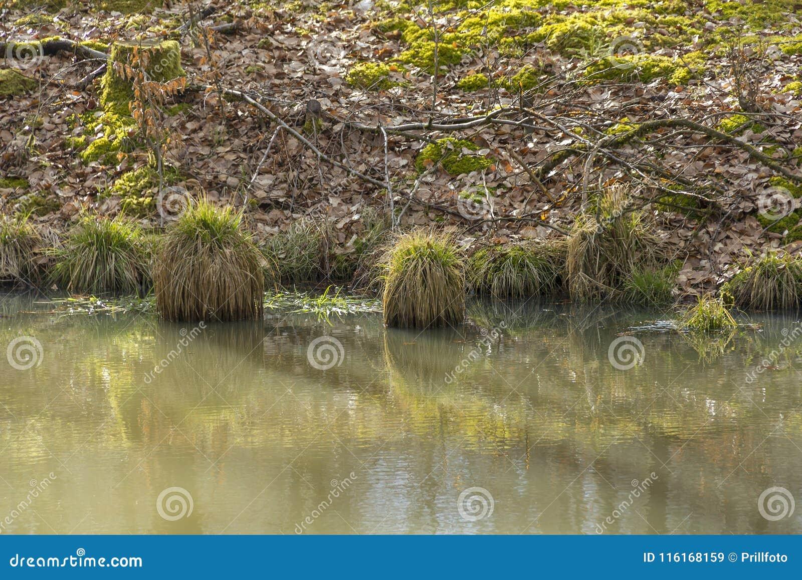 Пейзаж Riparian