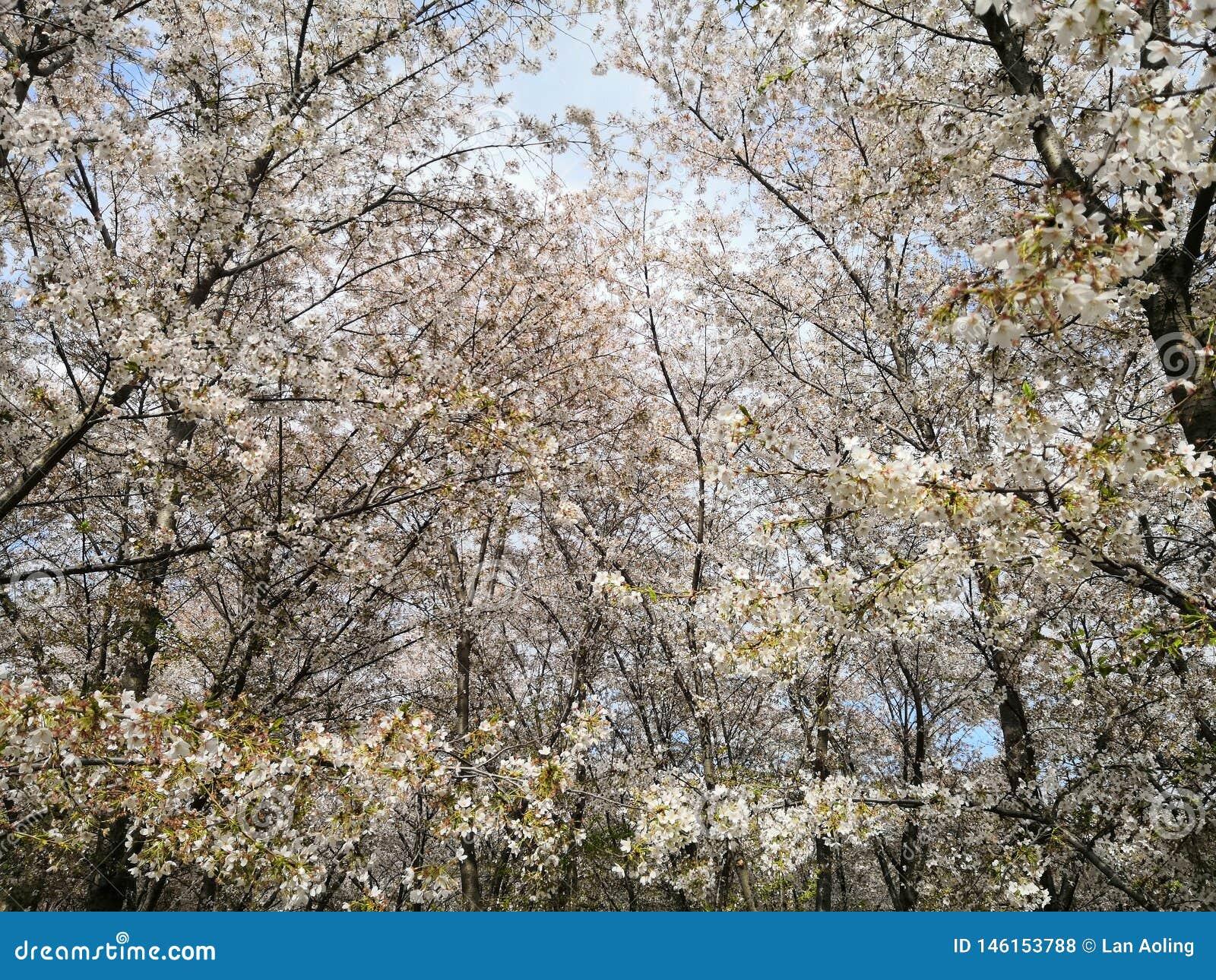 Пекин Yuyuantan в апреле