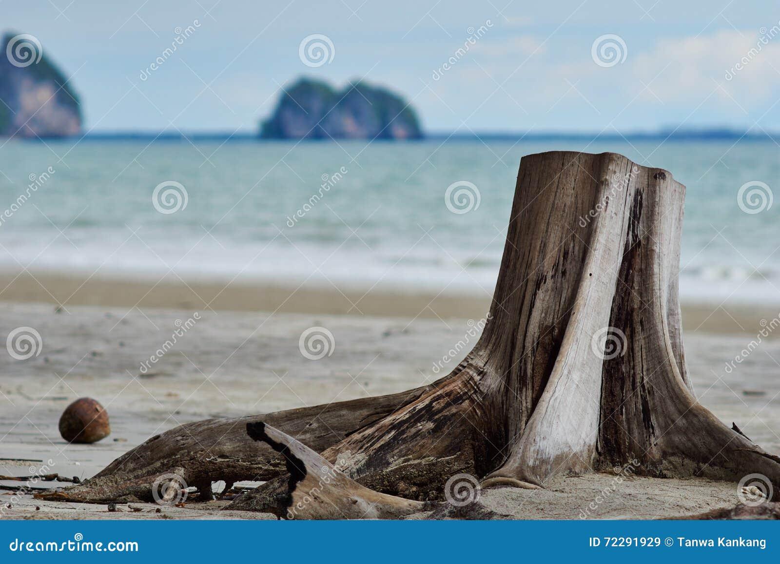 Download Пень на пляже стоковое изображение. изображение насчитывающей таиланд - 72291929