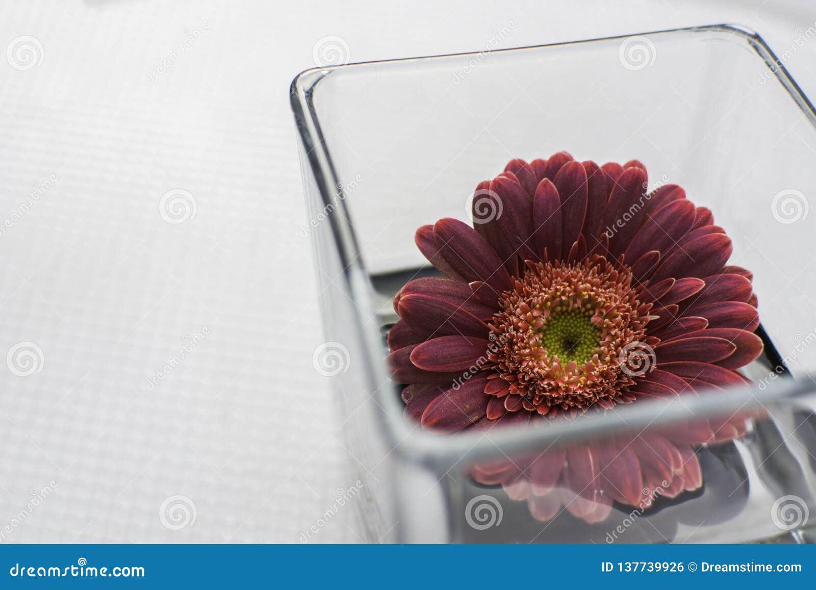 Первоклассный красный цветок в космосе вазы белом