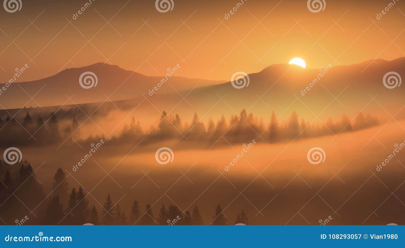 Первые золотые лучи восходящего солнца