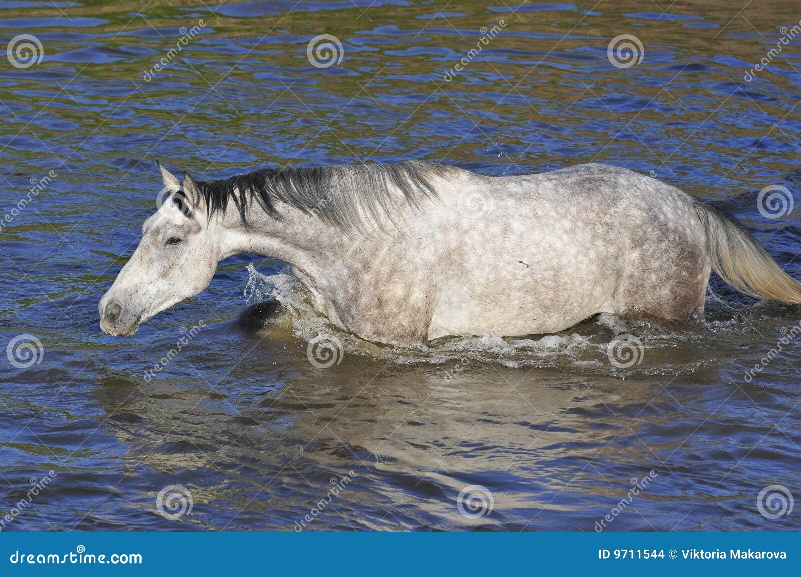 перекрестная белизна воды swim реки лошади