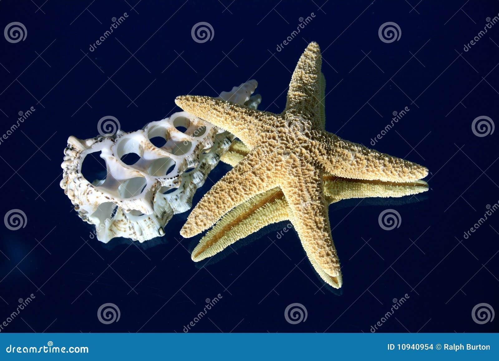 перекрестные starfish раздела seashell