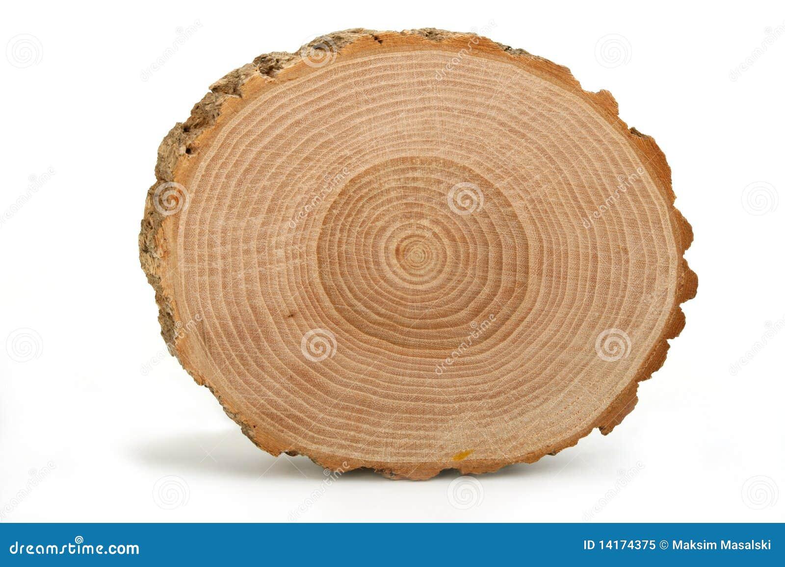 перекрестный раздел годичных колец показывая ствол дерева