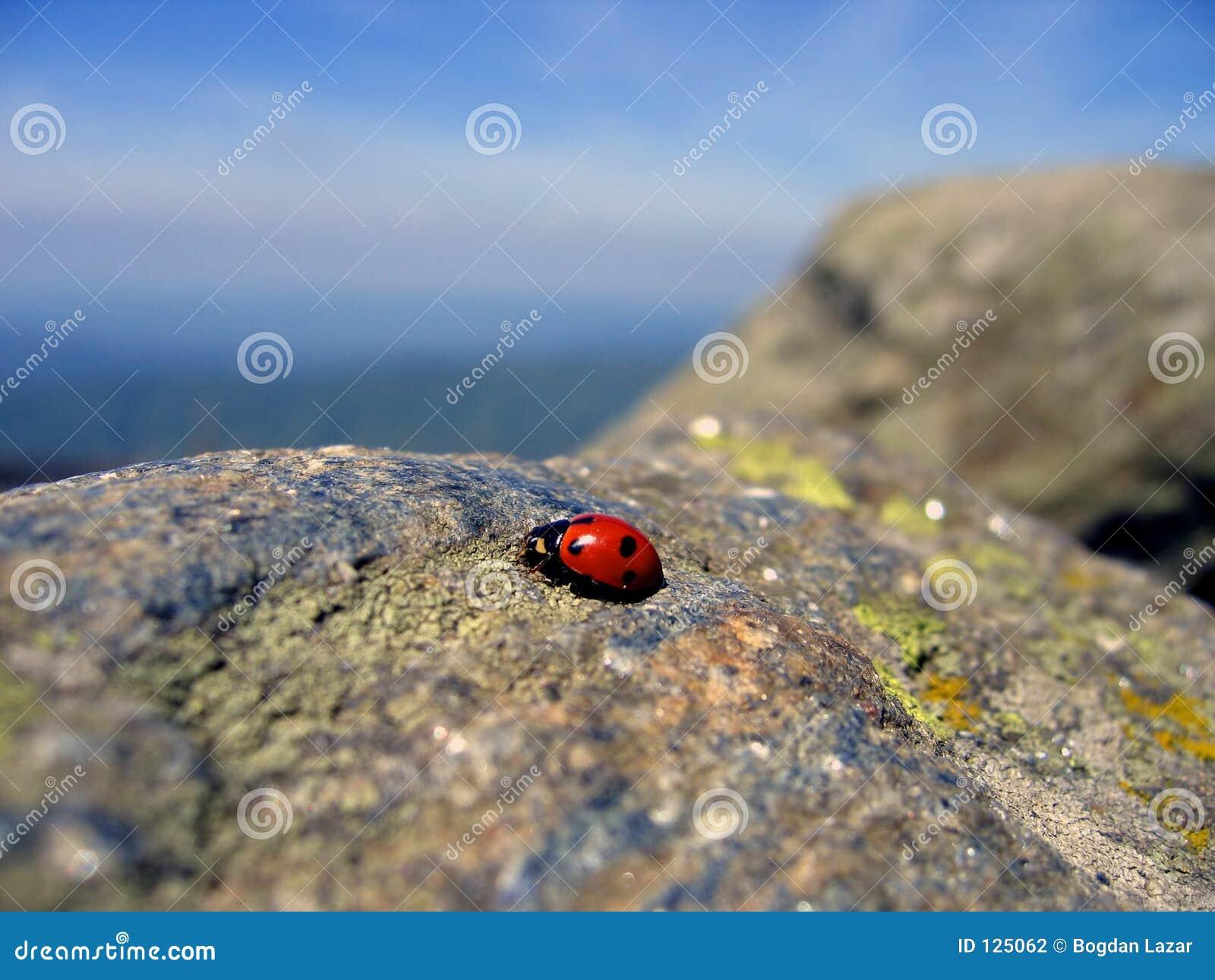 перемещать 2 ladybug