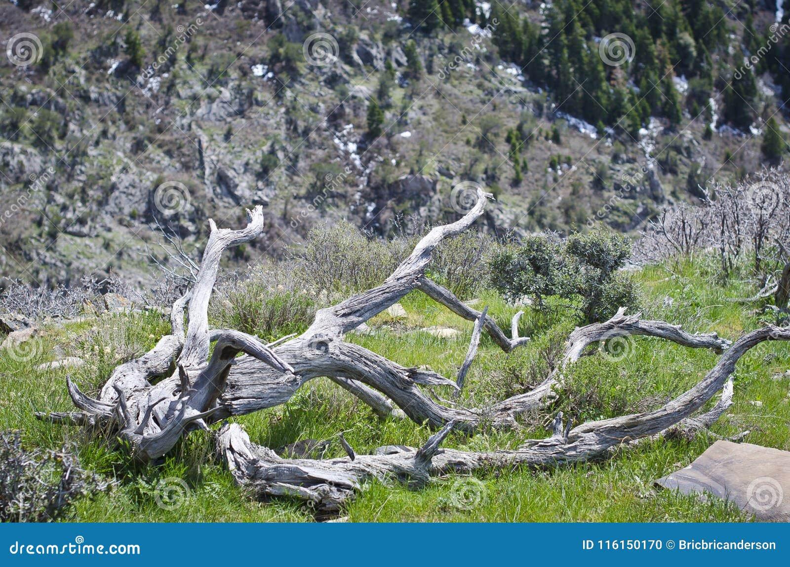 Переплетенный длиной на горном склоне