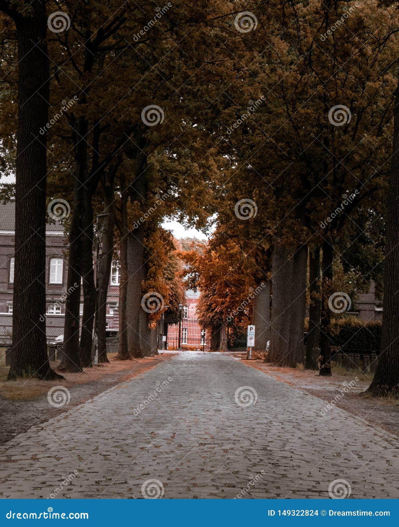 Переулок в осени forrest