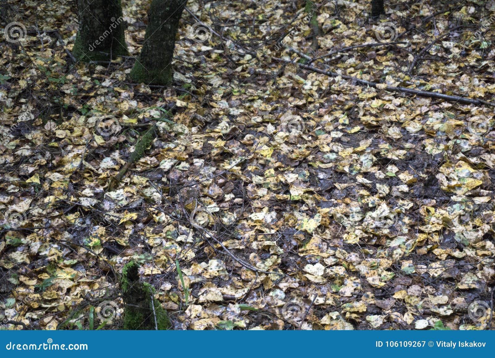Переулок парка осени ландшафта осени с чуть-чуть деревьями и сухими упаденными красочными листьями