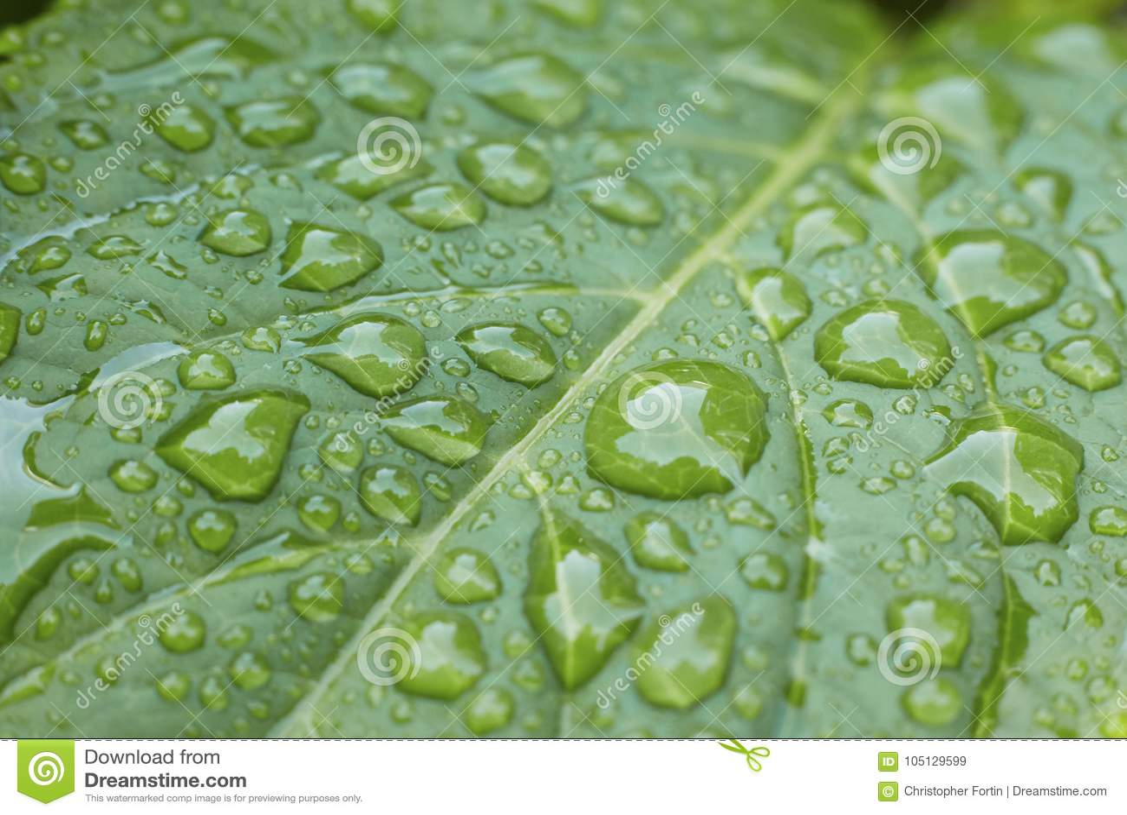 Перспектива конца-вверх раскосная падений росы на живых зеленых лист