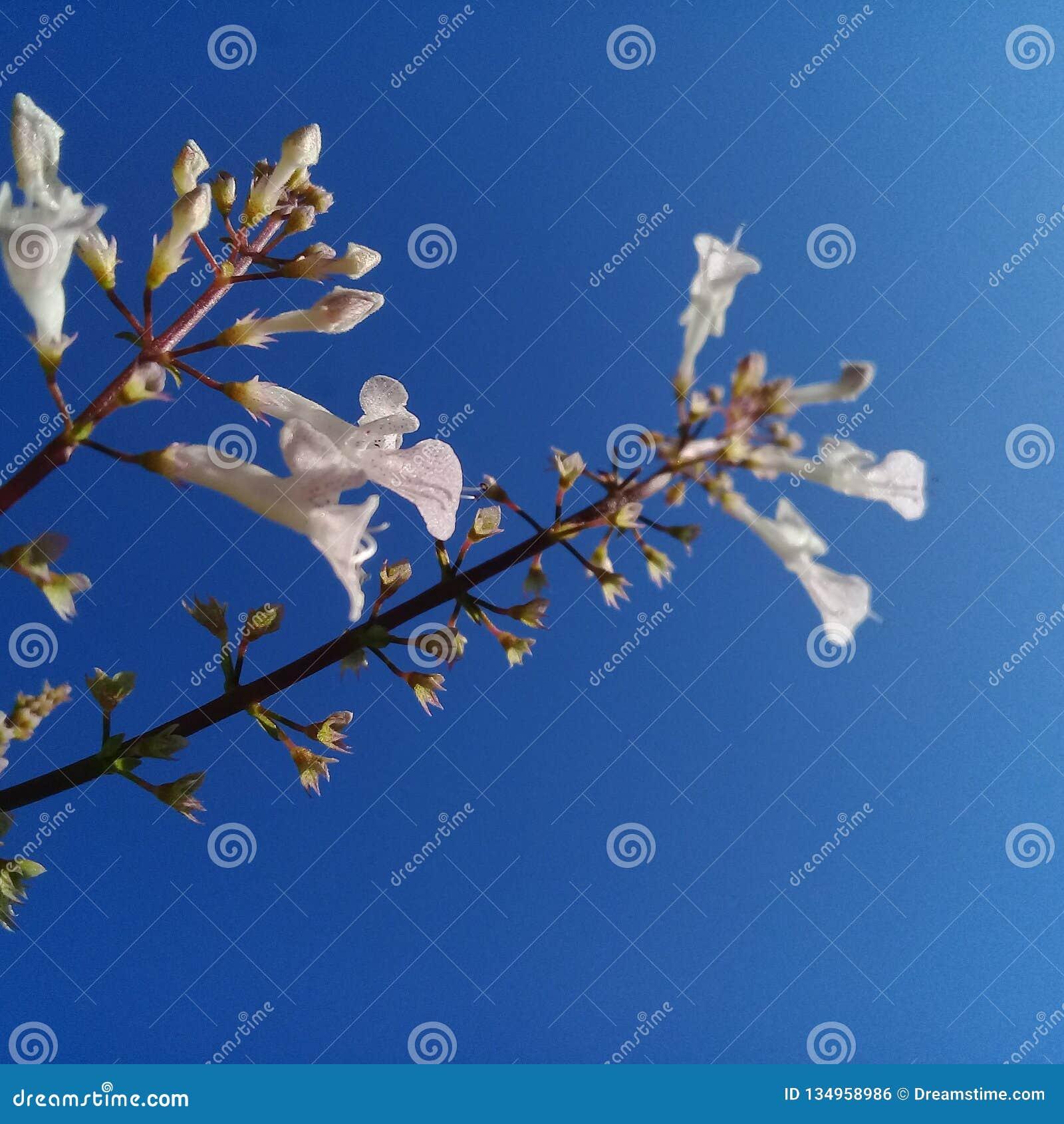 Перспектива с цветками