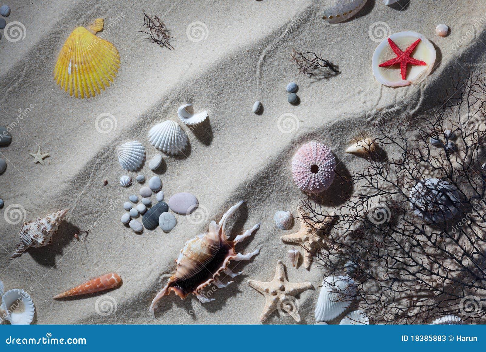 песок обстреливает starfish