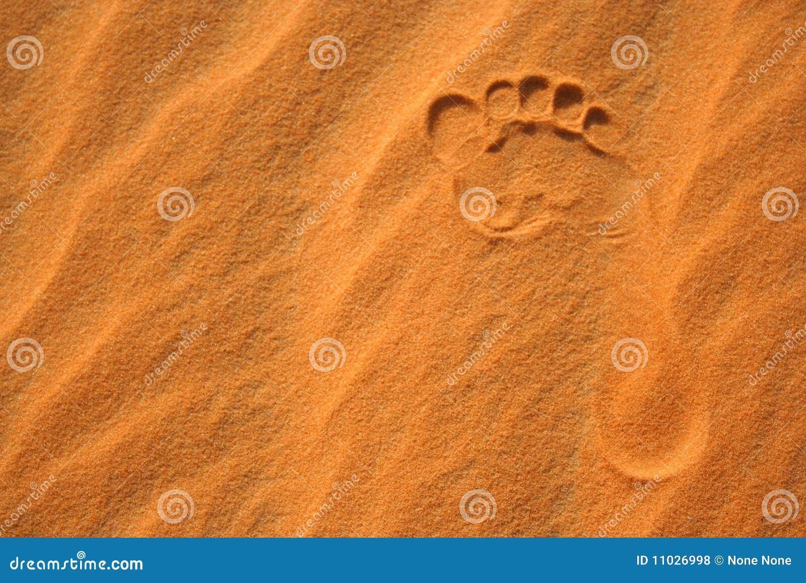 песок следа ноги