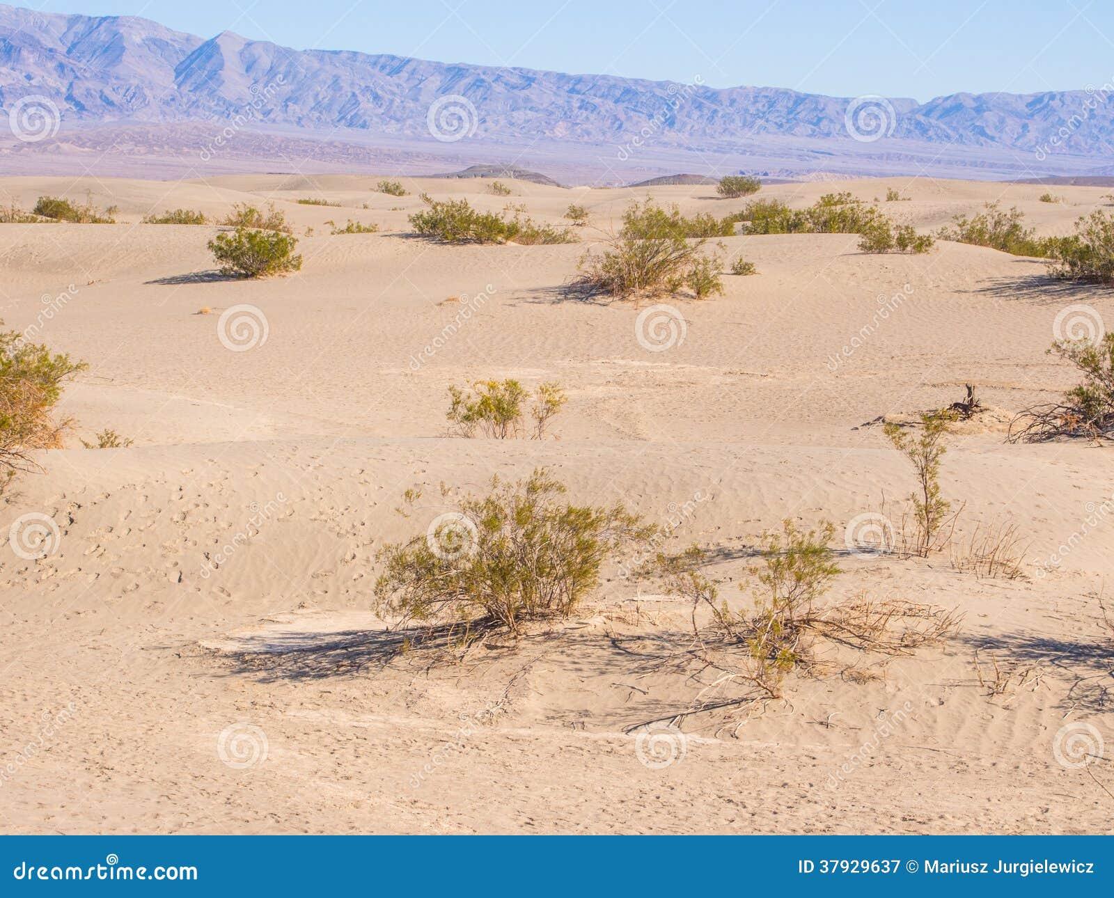 Песчанные дюны Mesquite плоские