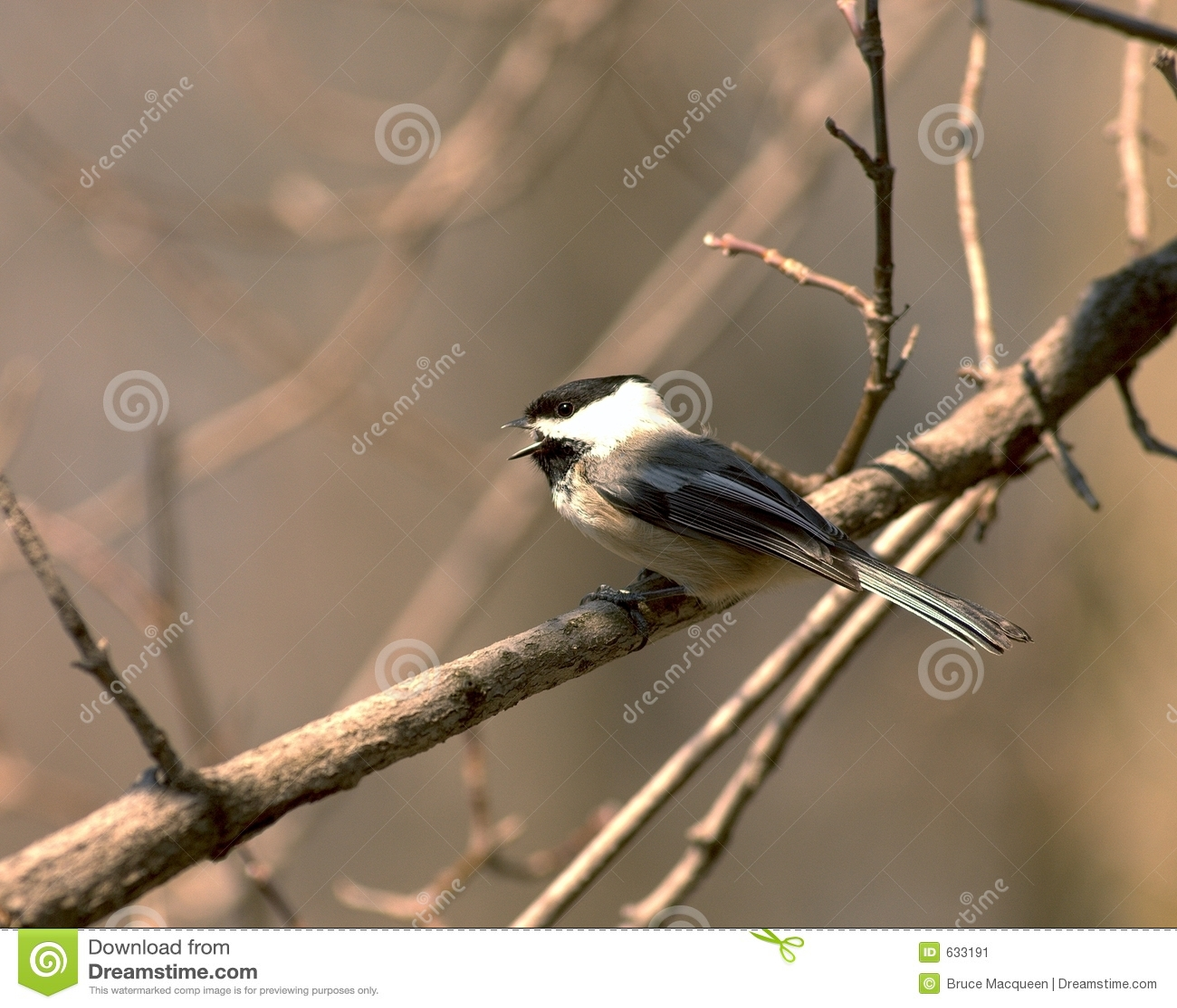 Download петь chickadee стоковое изображение. изображение насчитывающей wildlife - 633191
