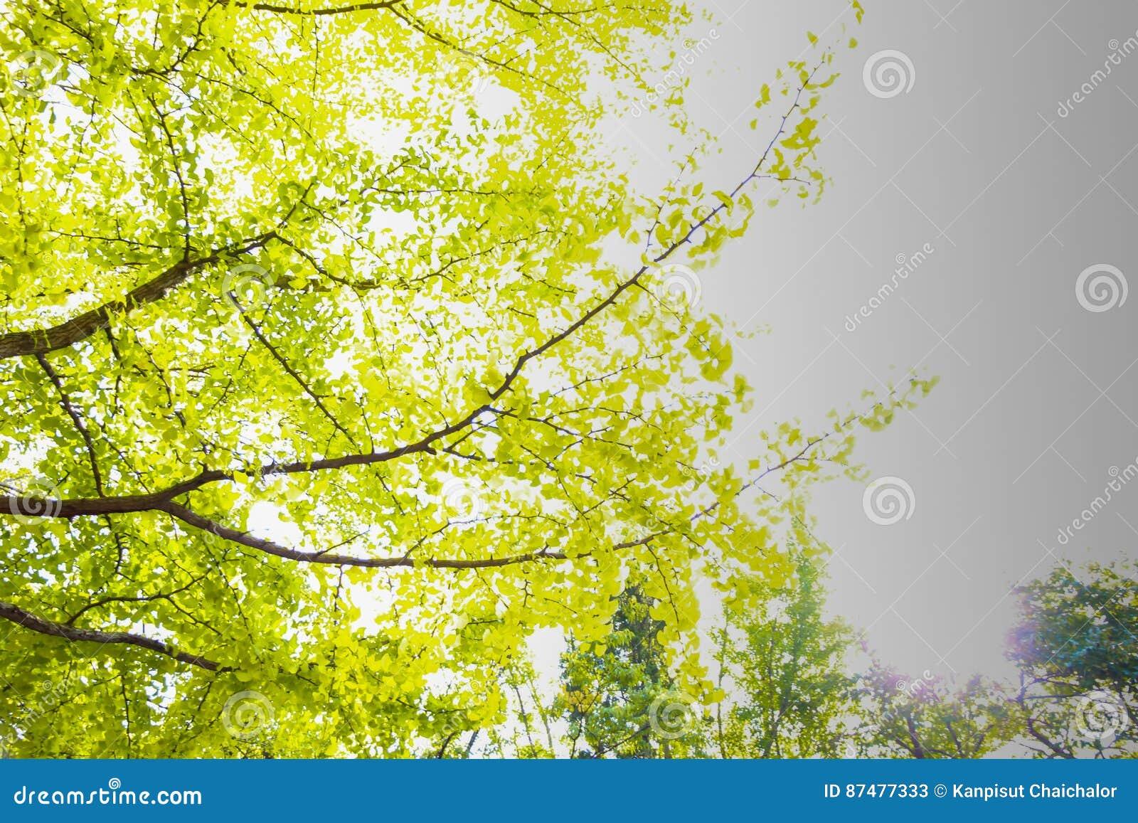 Пиковое дерево от нижнего взгляда
