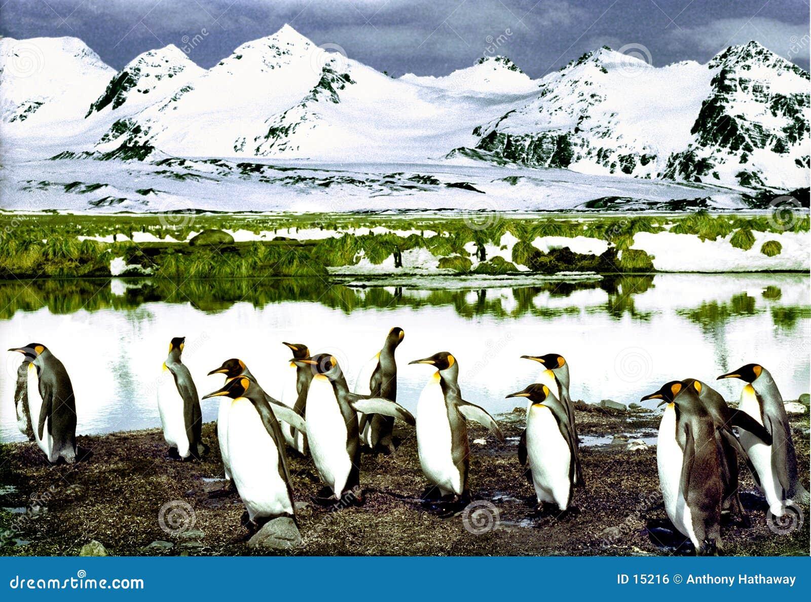 пингвины короля