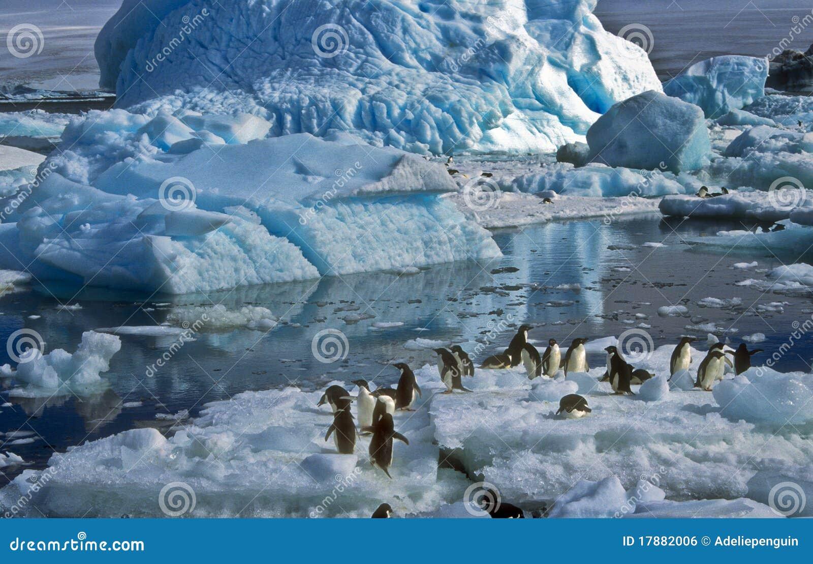 пингвины льда Антарктики adelie
