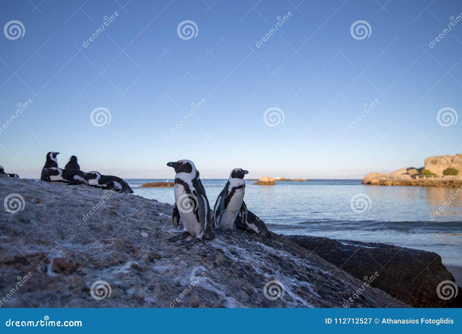 Пингвины на утесе