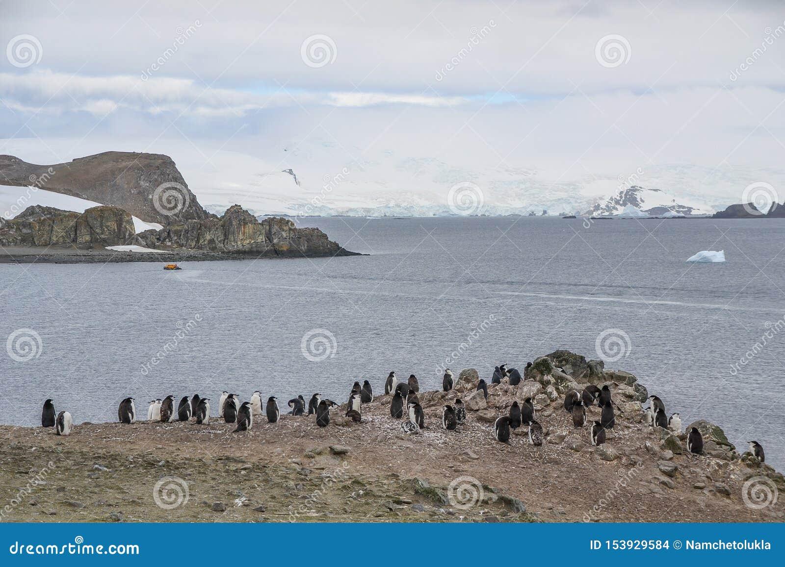Пингвины Chinstrap стоя на скалистой местности в Антарктике