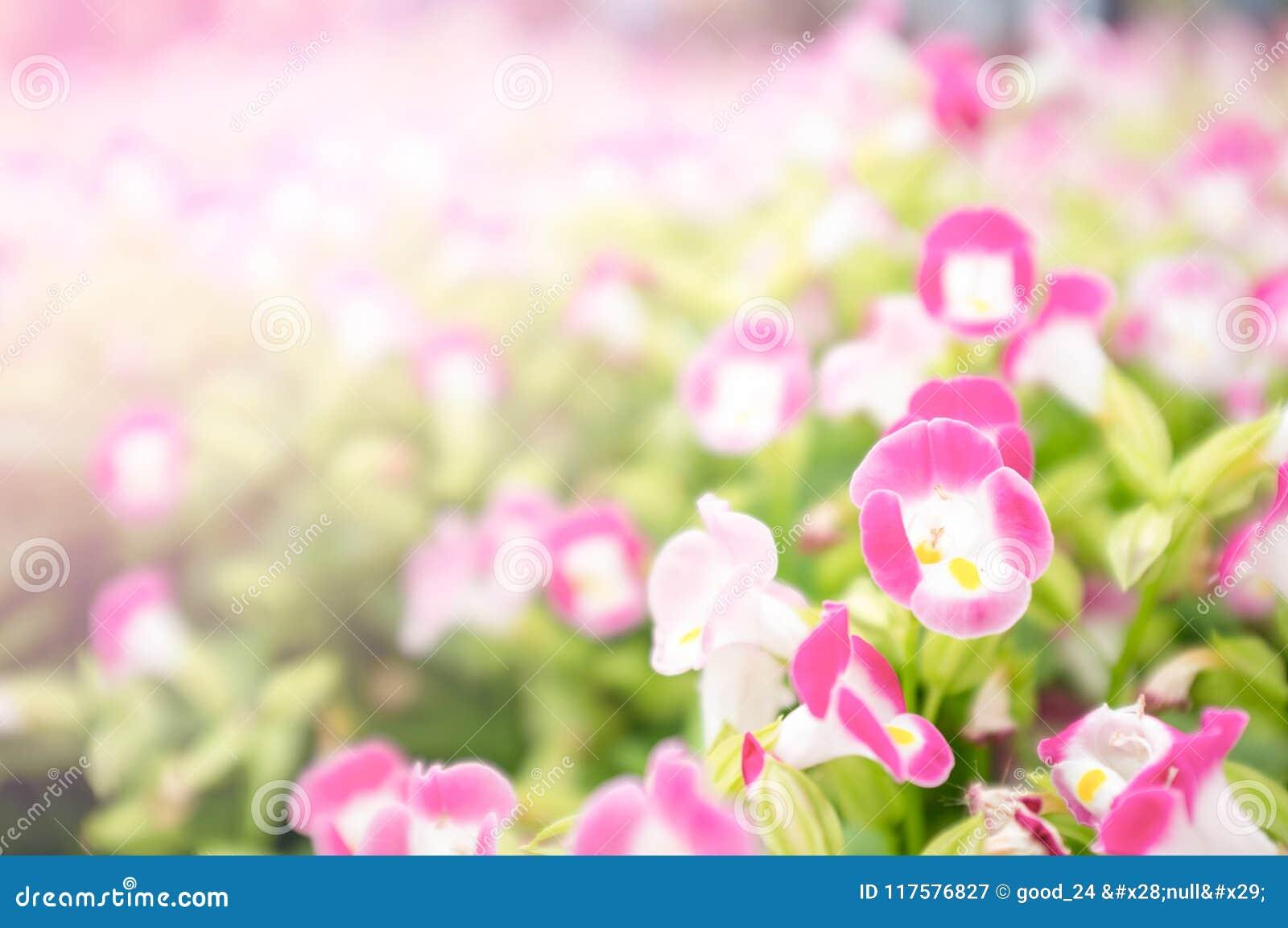 Пинг-красный цветок в саде на день валентинки и счастливый день