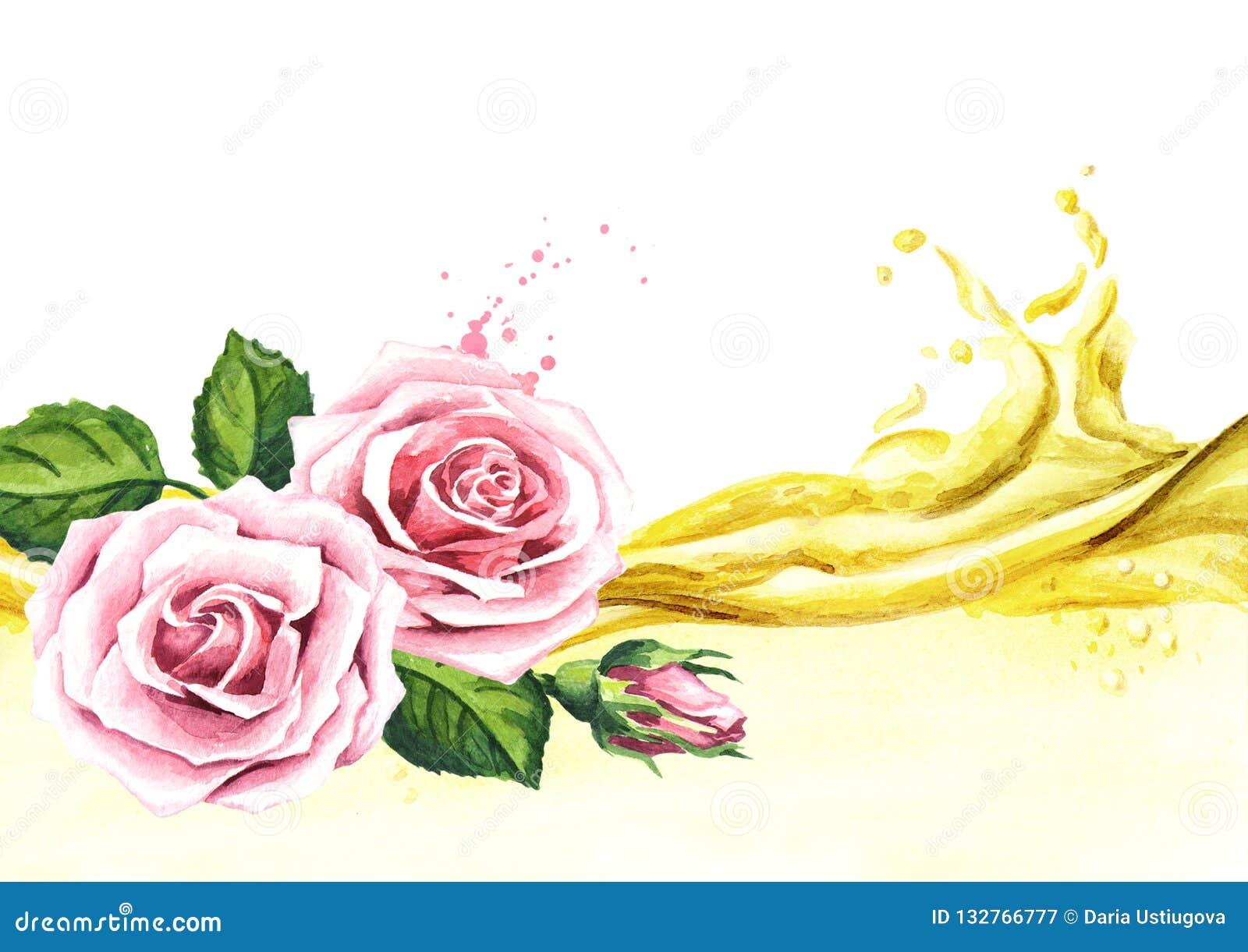 Пинк поднял волна цветка и эфирного масла aromatherapy спа Иллюстрация акварели нарисованная рукой, изолированная на белой предпо
