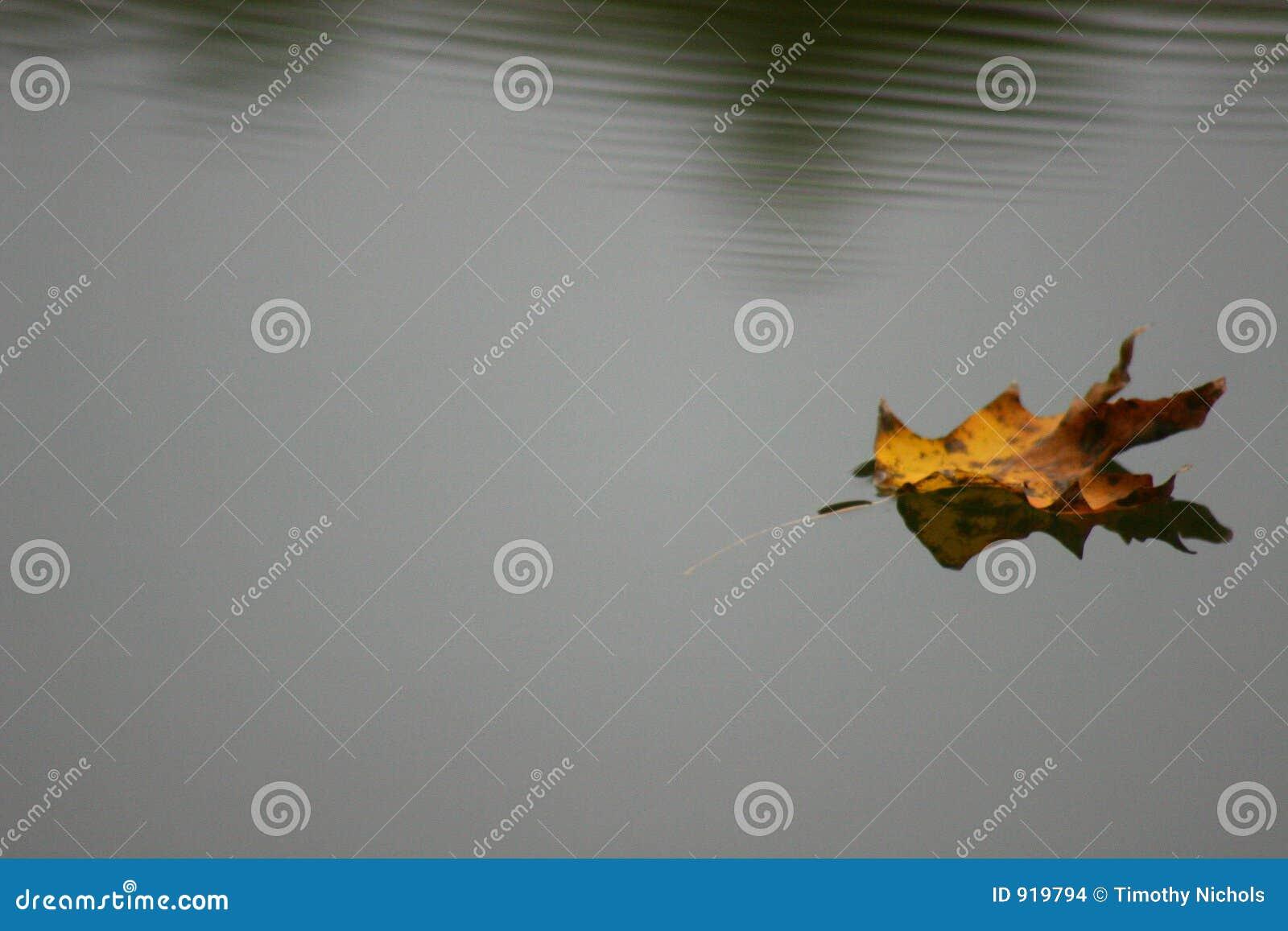 плавая вода листьев