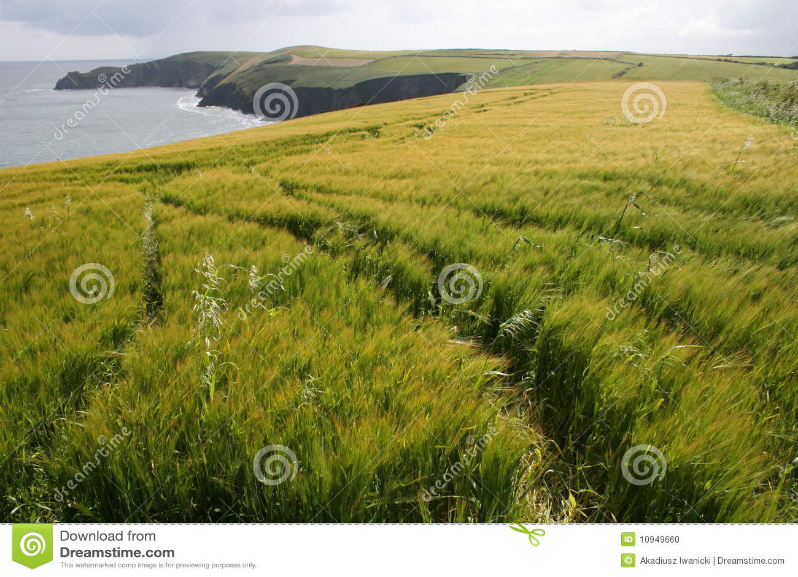 плантации Ирландии графства пробочки скал