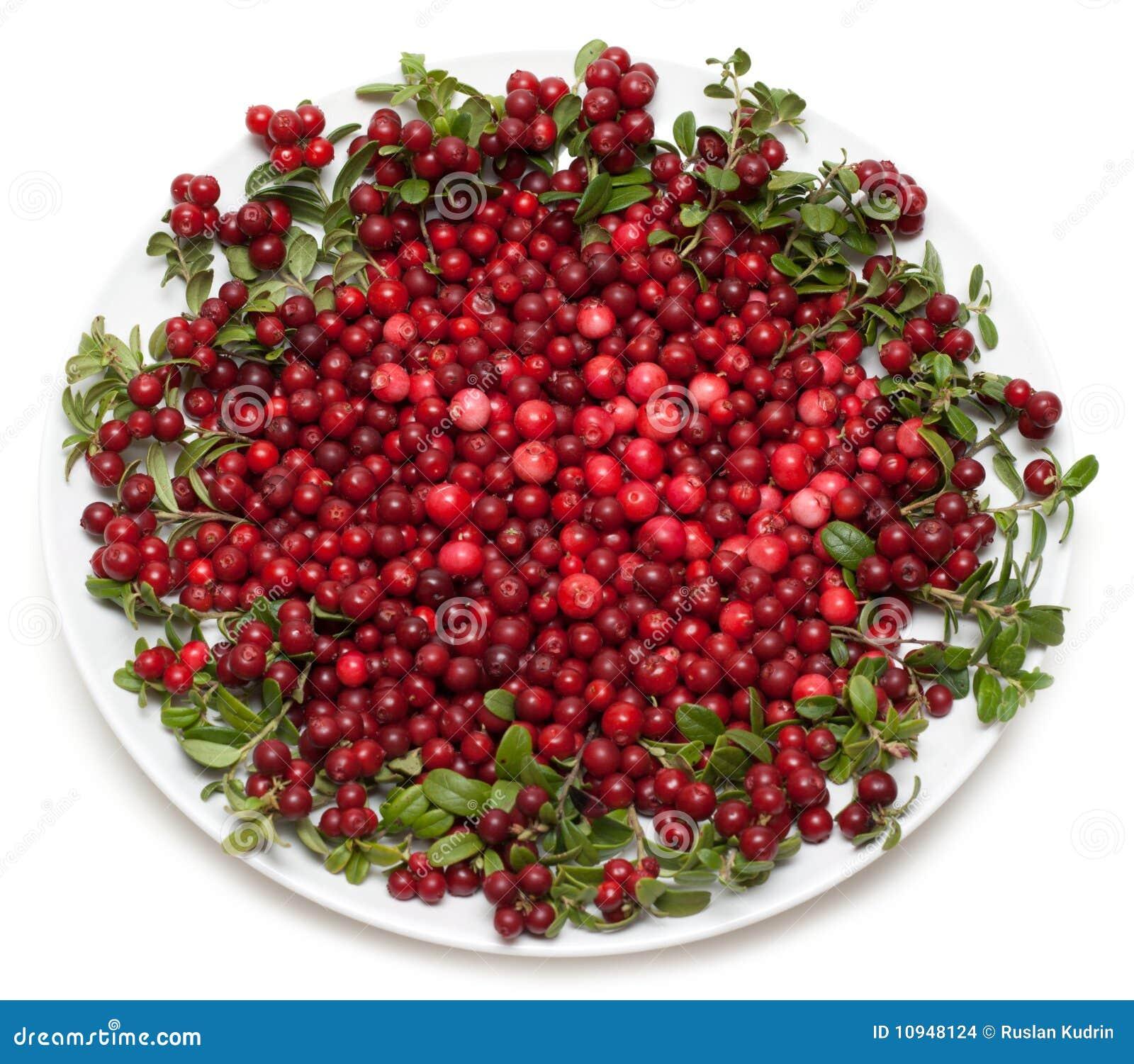 плита cowberry
