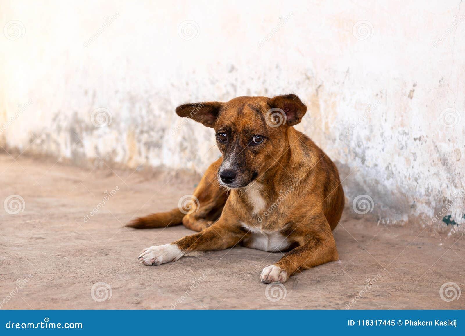 Плохая и несчастная бездомная собака