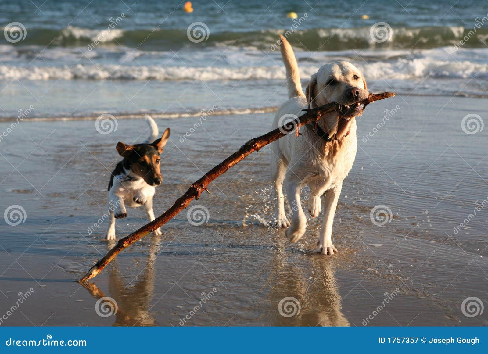 пляж выслеживает шаловливую ручку