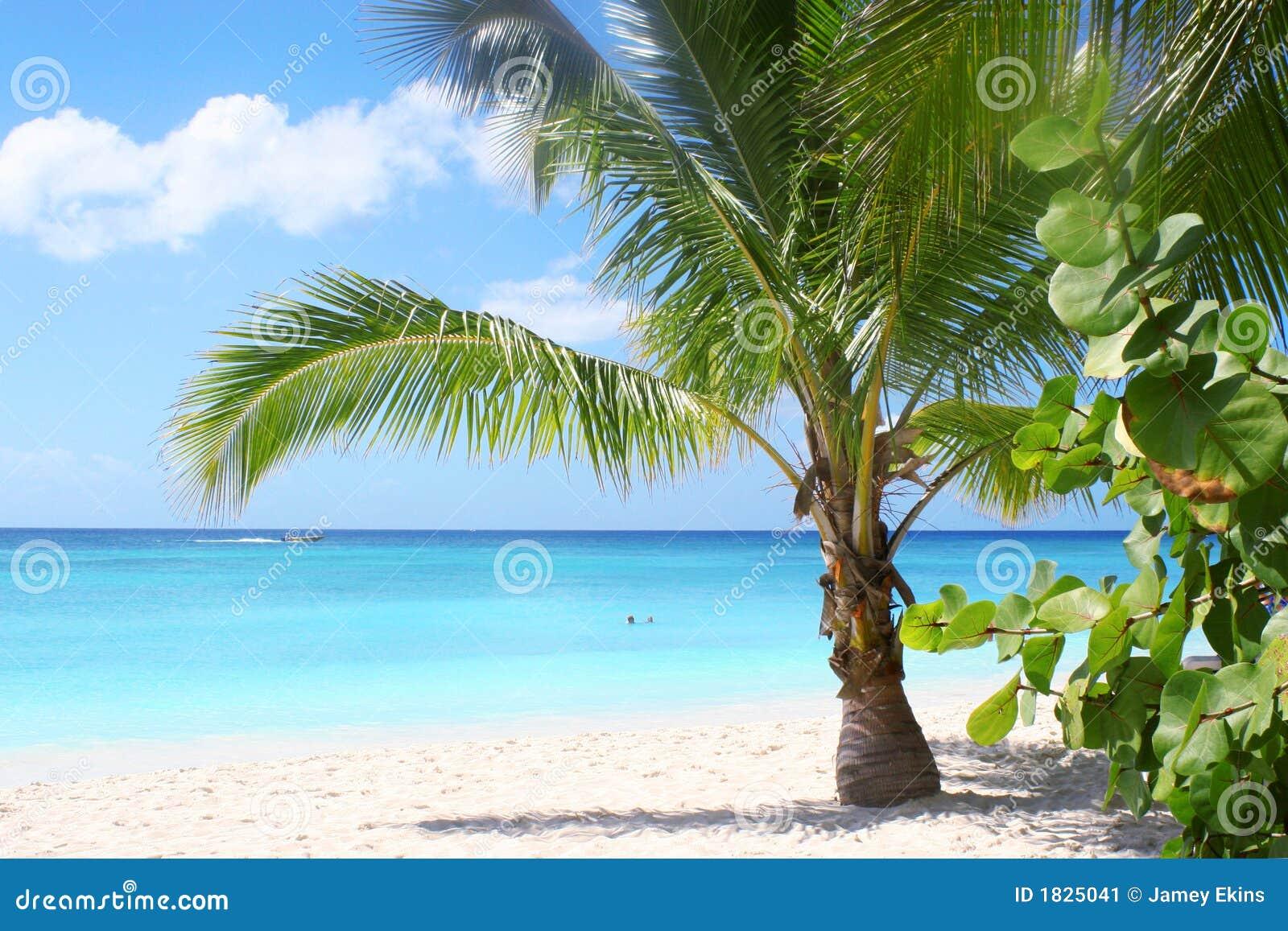 пляж залива тропический