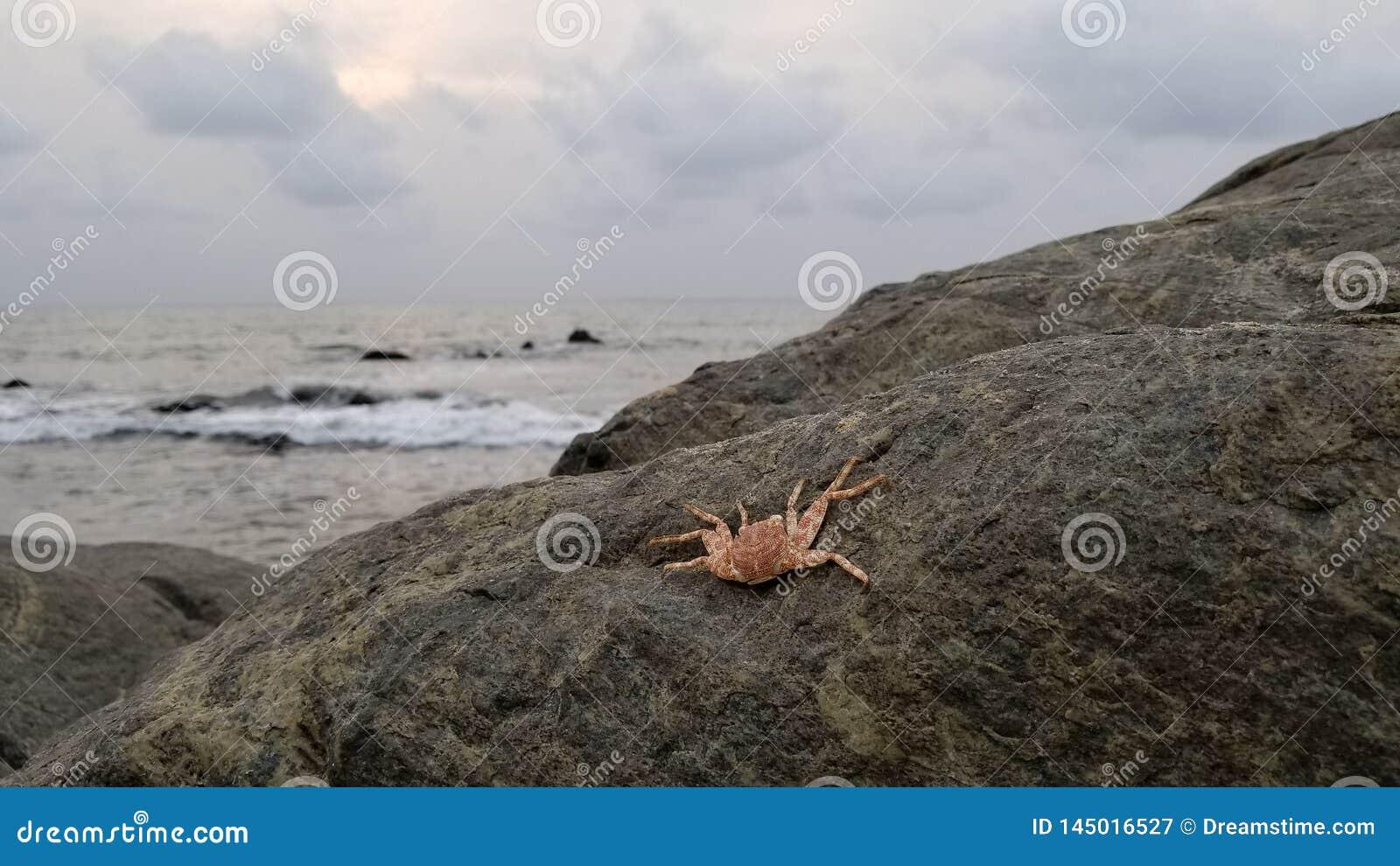 Пляж и краб в Kribi Камеруне