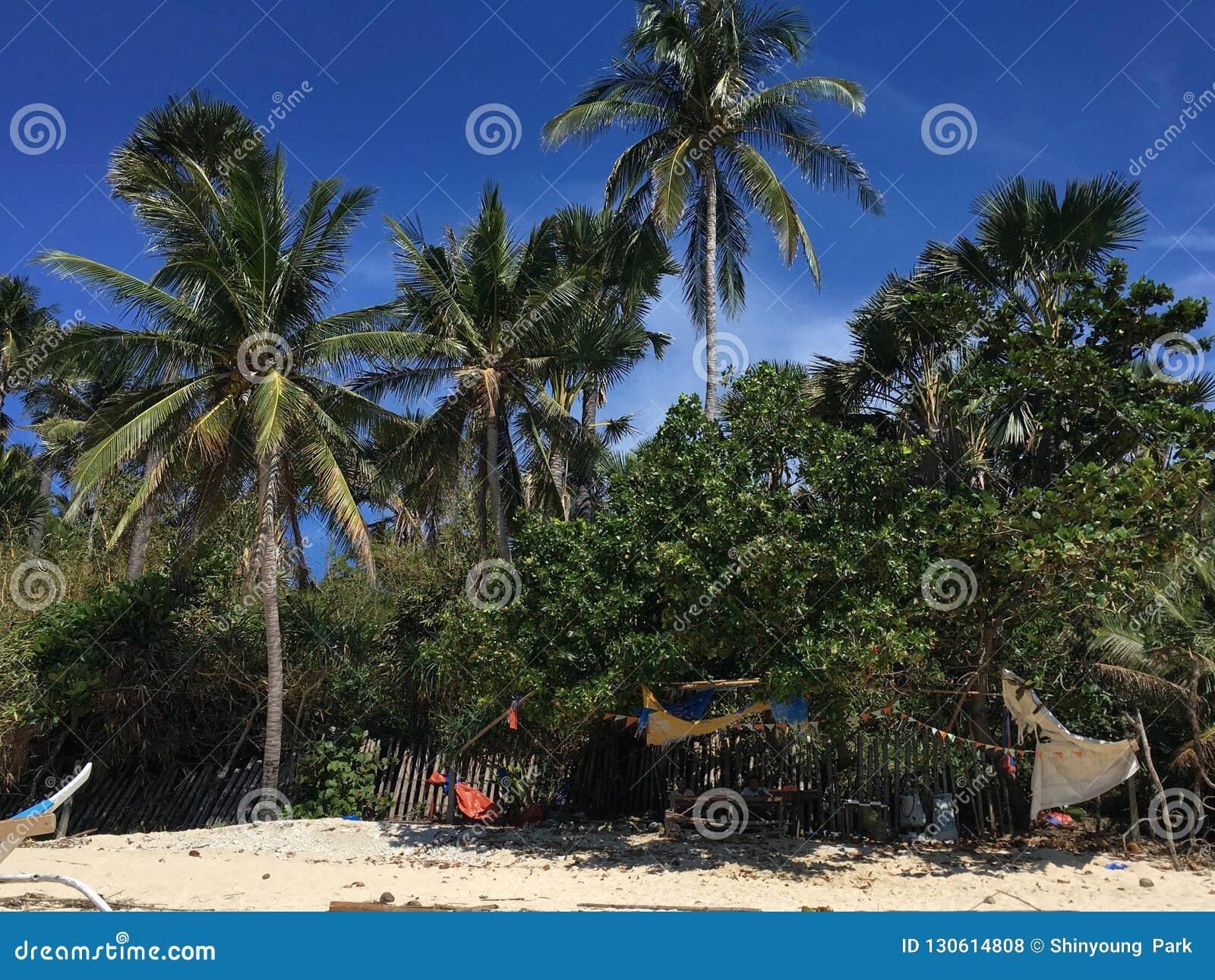 Пляж рая ладони тропический на Филиппинах с белым песком и голубым небом
