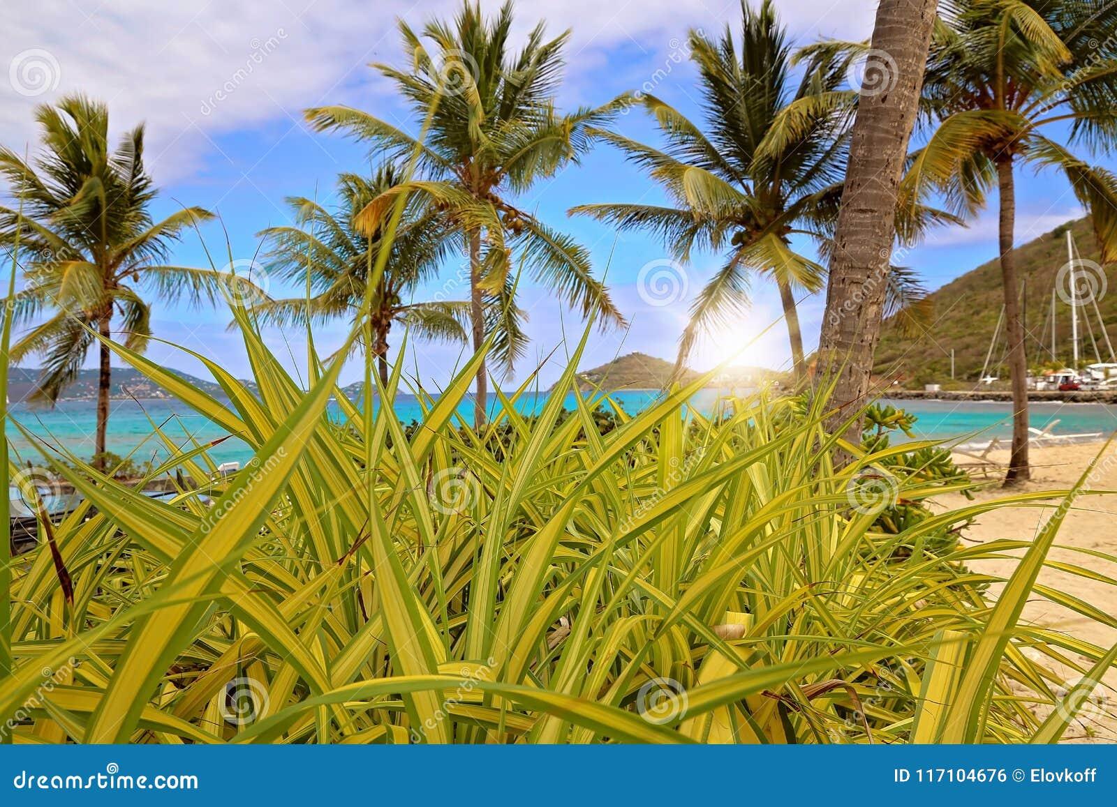 Пляж сапфира на острове St. Thomas