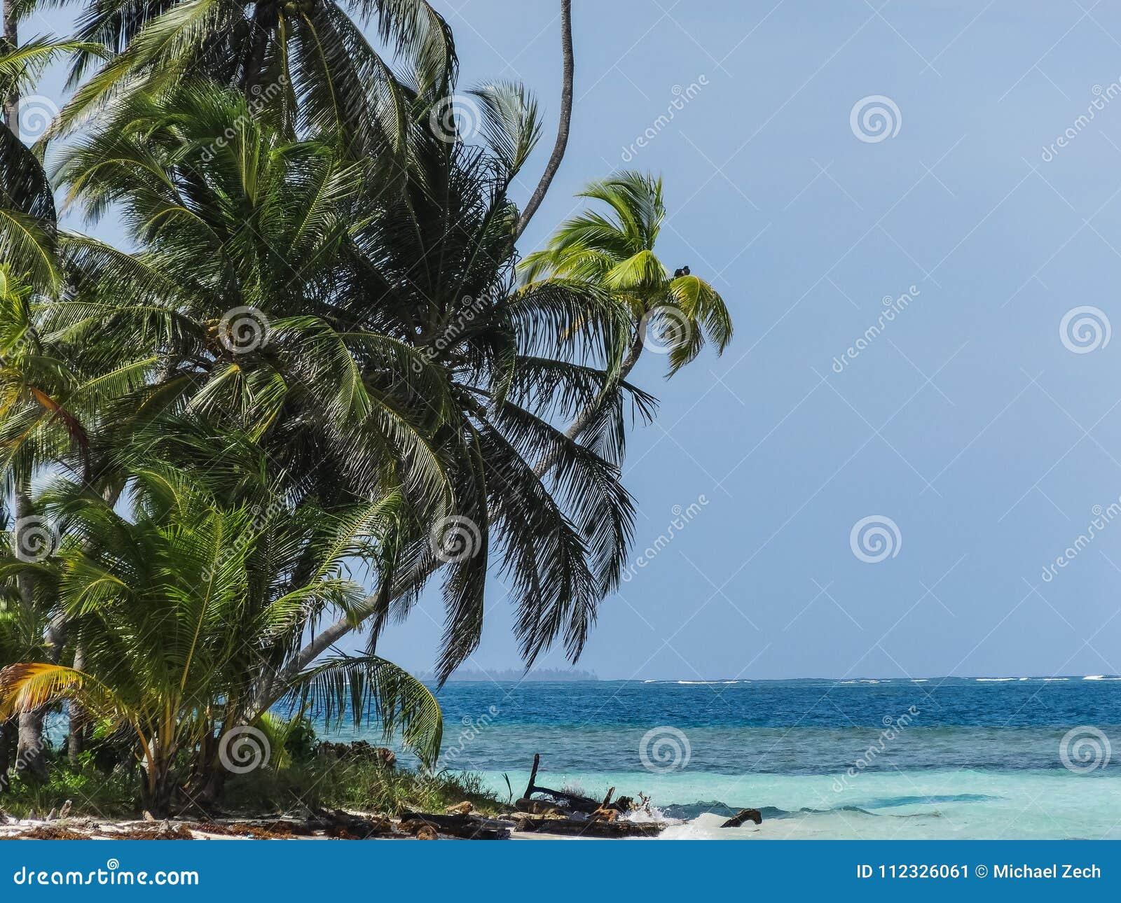 Пляж совершенного рая тропический с ладонями в Панаме