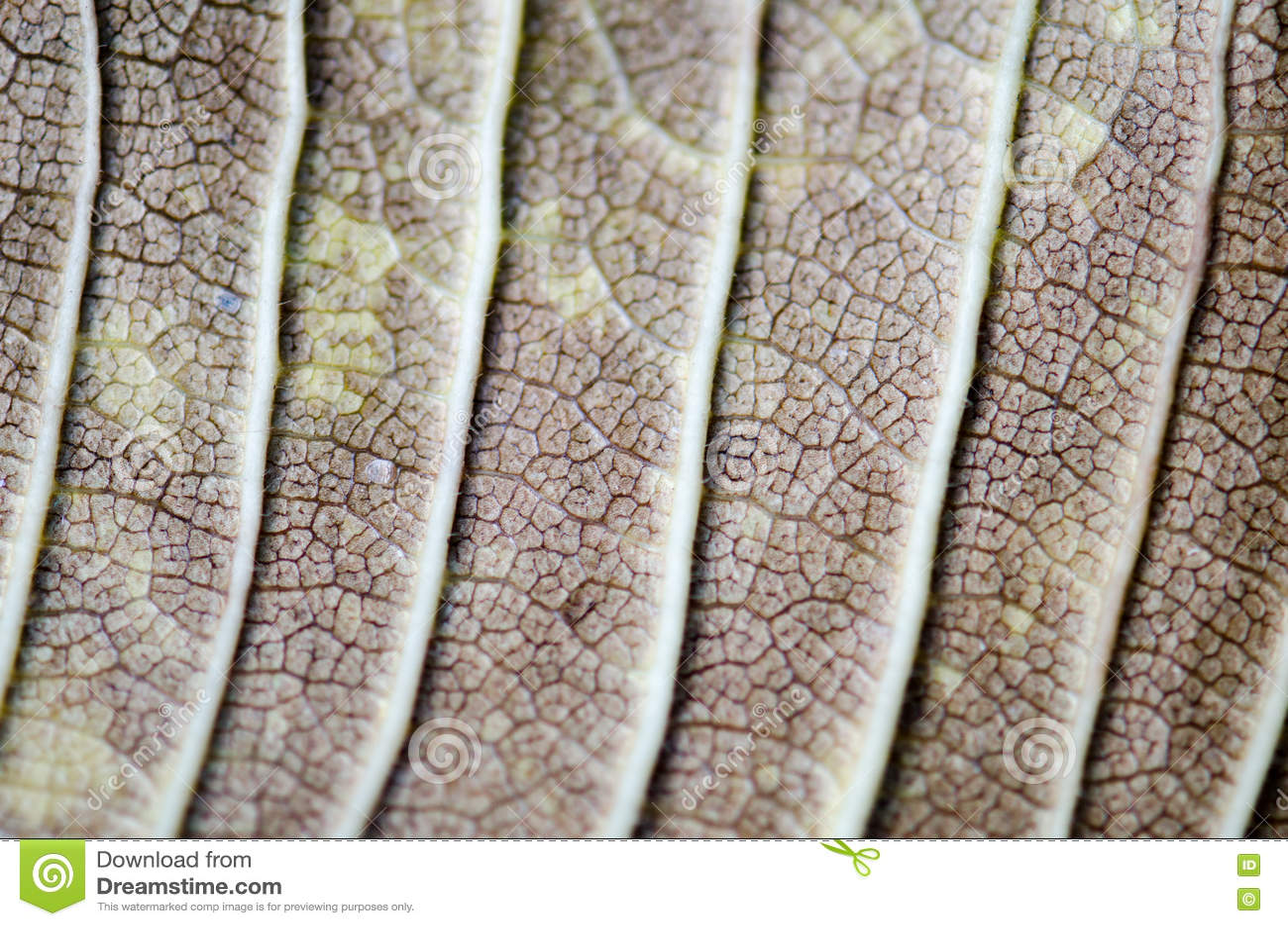 Поверхность лист дерева, макрос лист, деталь, цвет, ясность, линии, затеняя